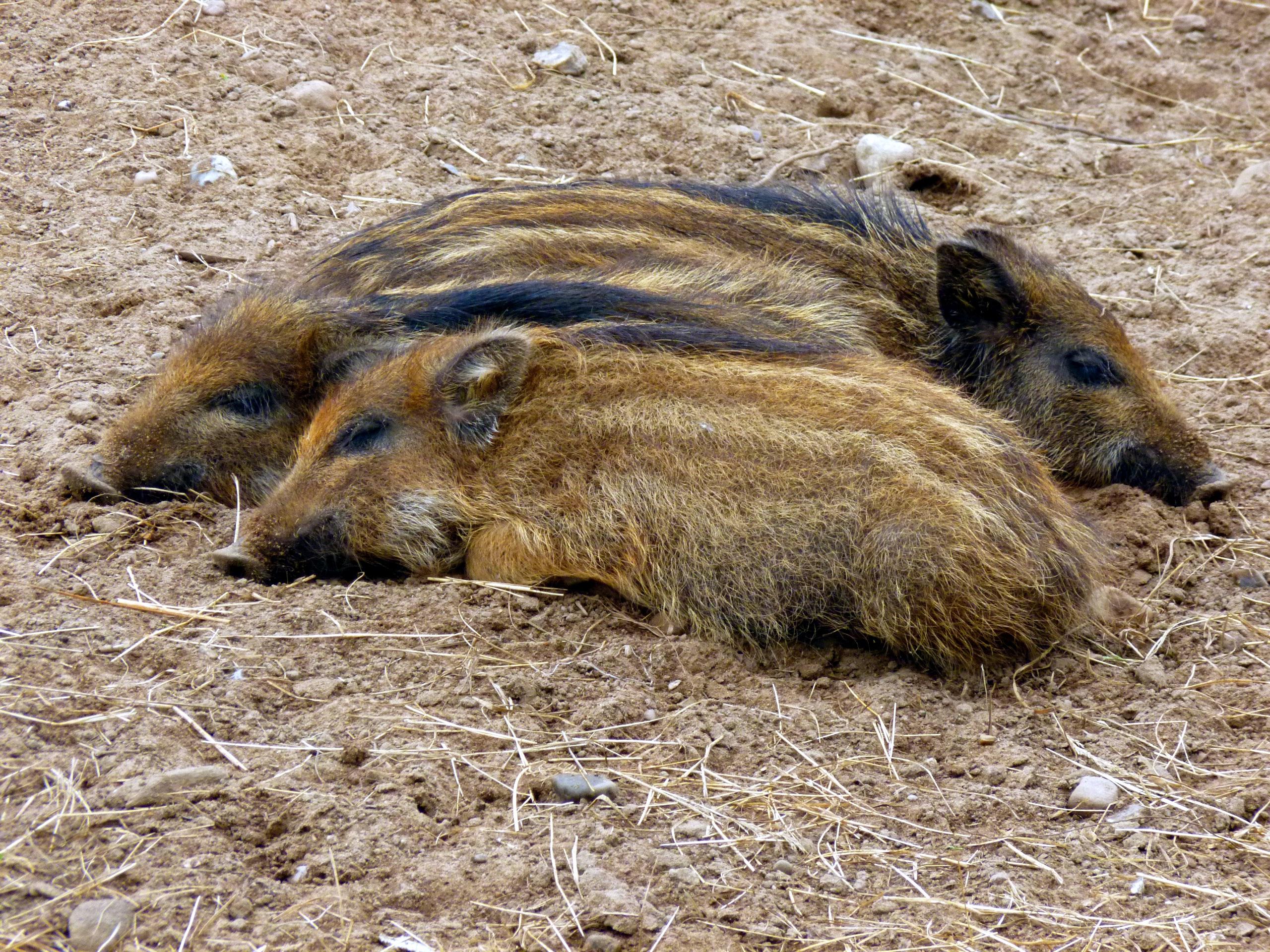 Fotos Gratis Naturaleza Linda Fauna Silvestre Joven Barro