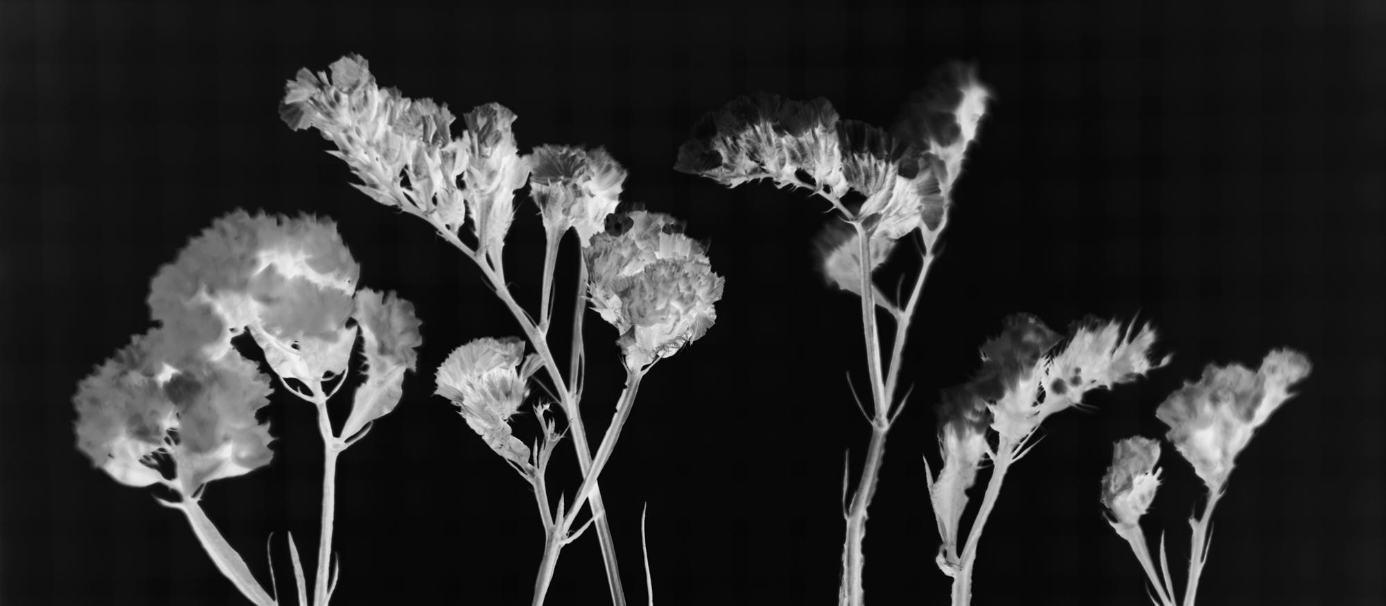 無料画像 自然 デスクトップ 花 葉 バックグラウンド 綺麗な