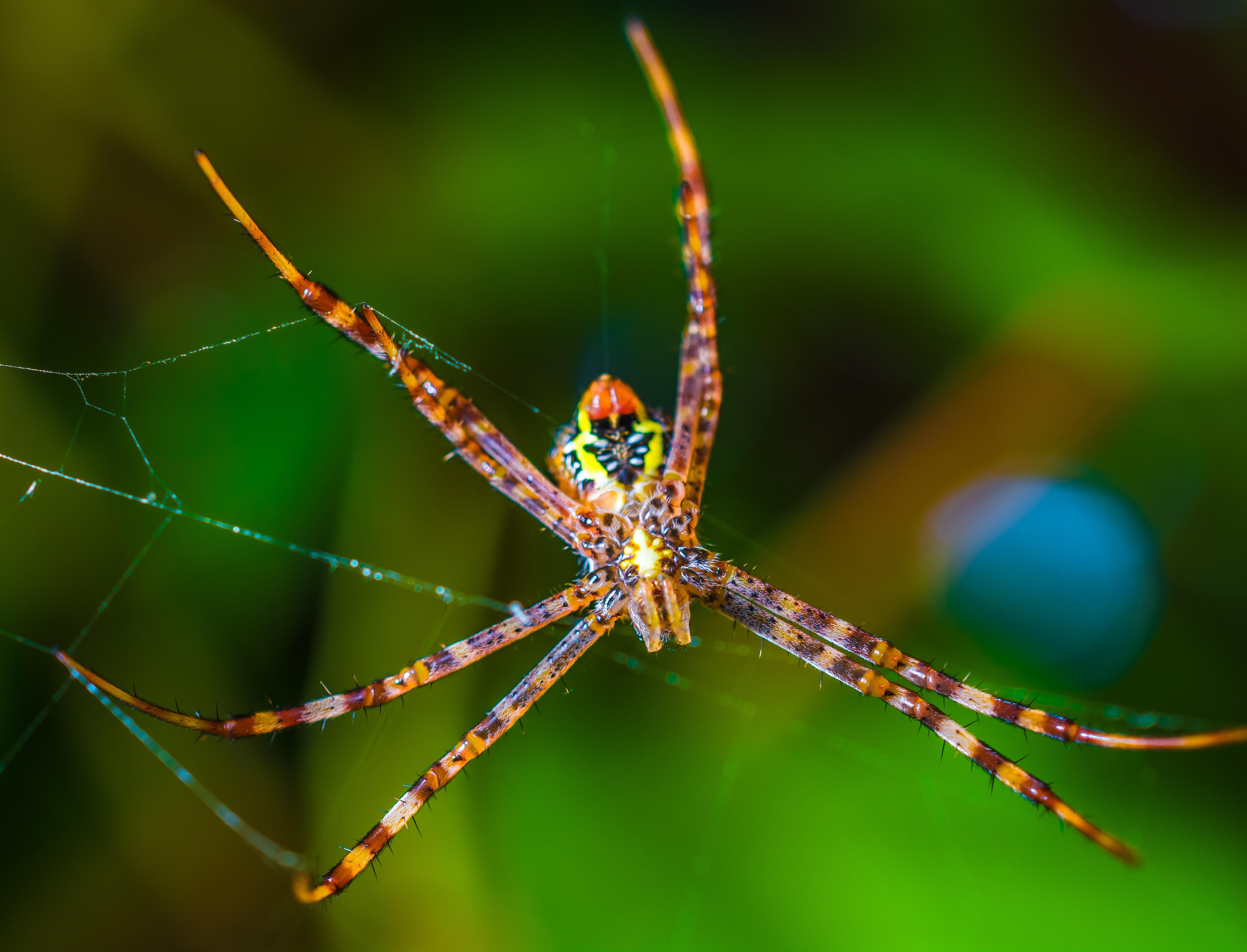 Садовый паук картинка