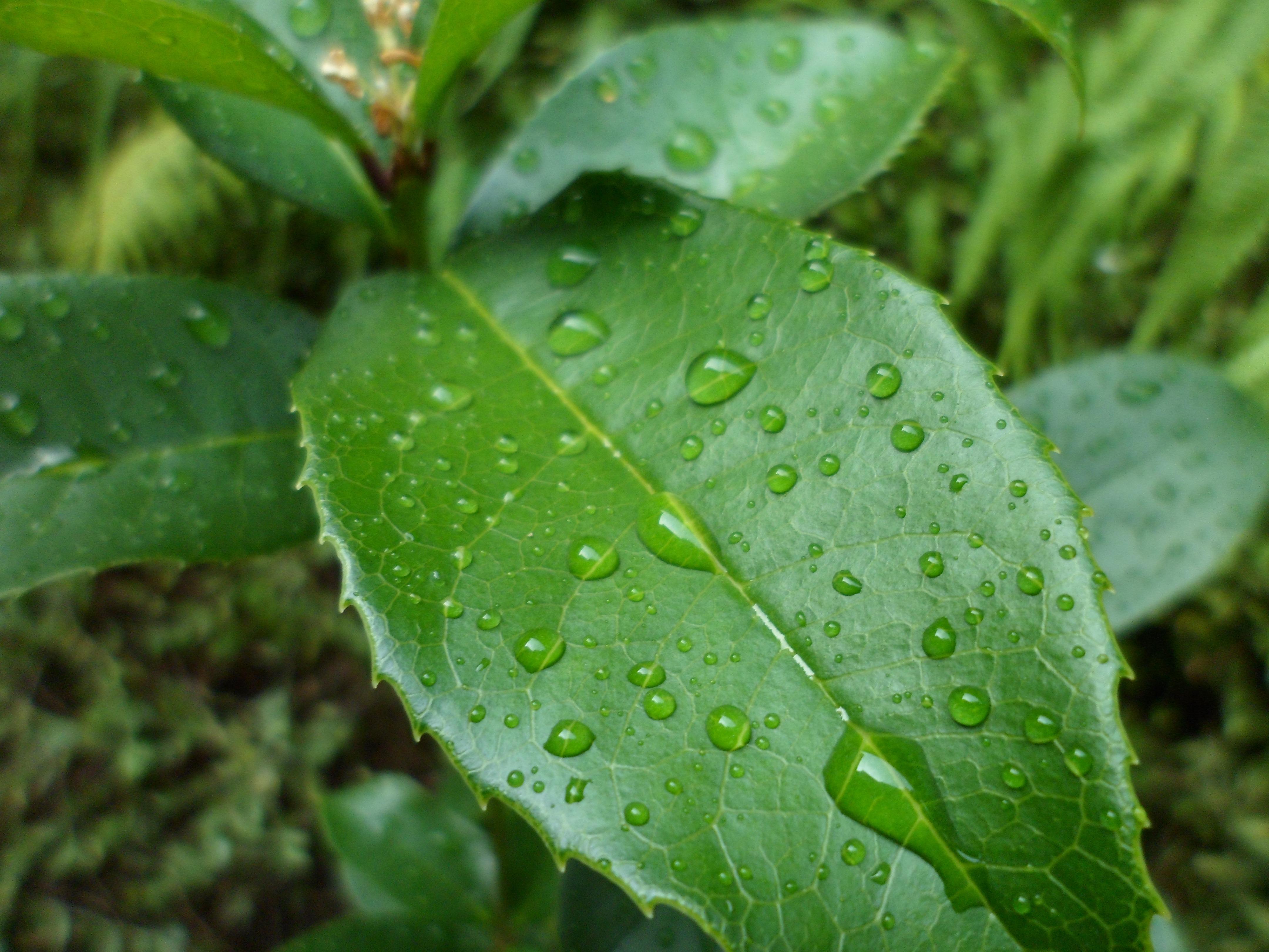 Листочки растений картинки