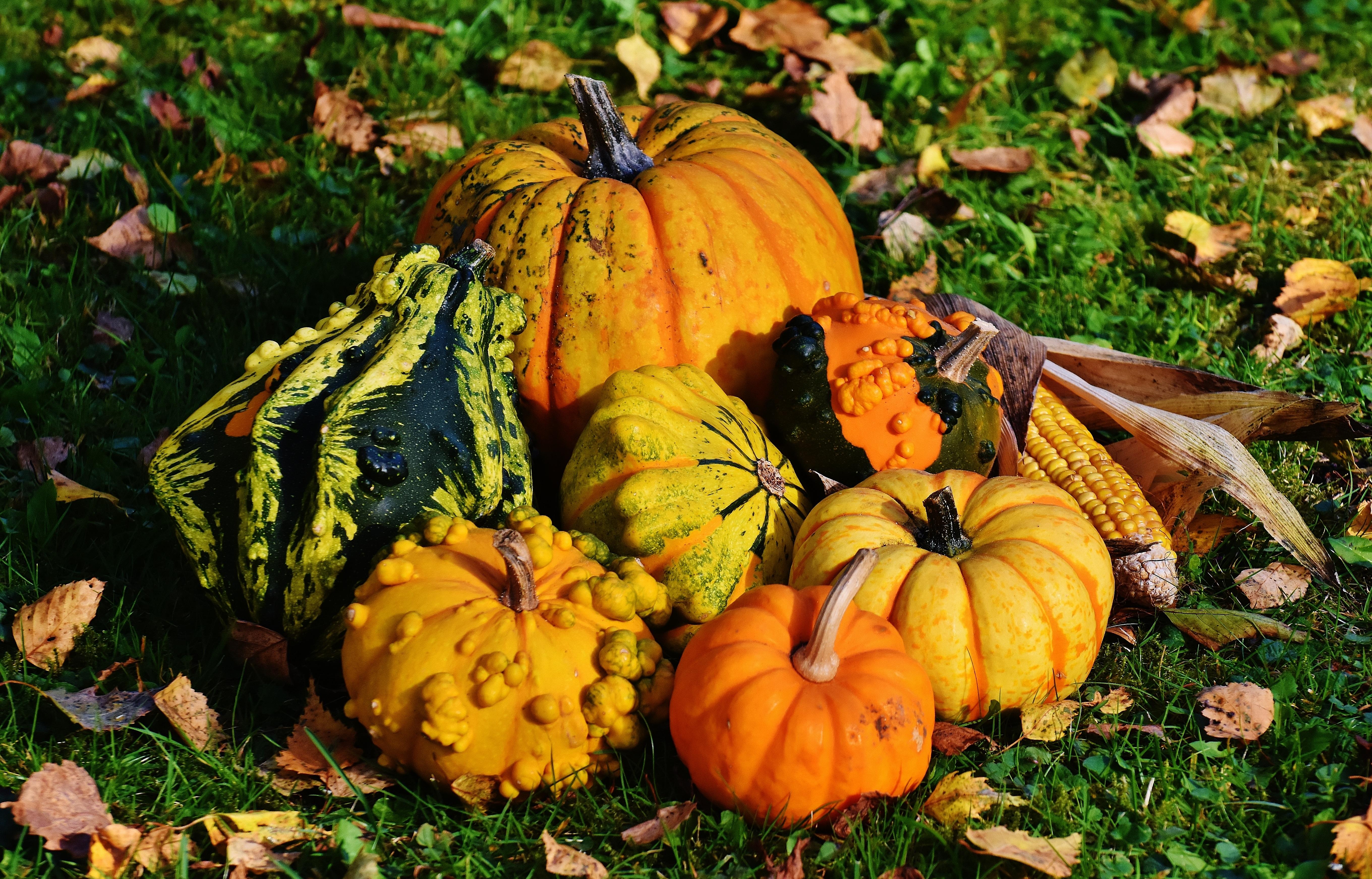 Images gratuites la nature fleur d coration r colte produire l 39 automne citrouille - Images d automne gratuites ...