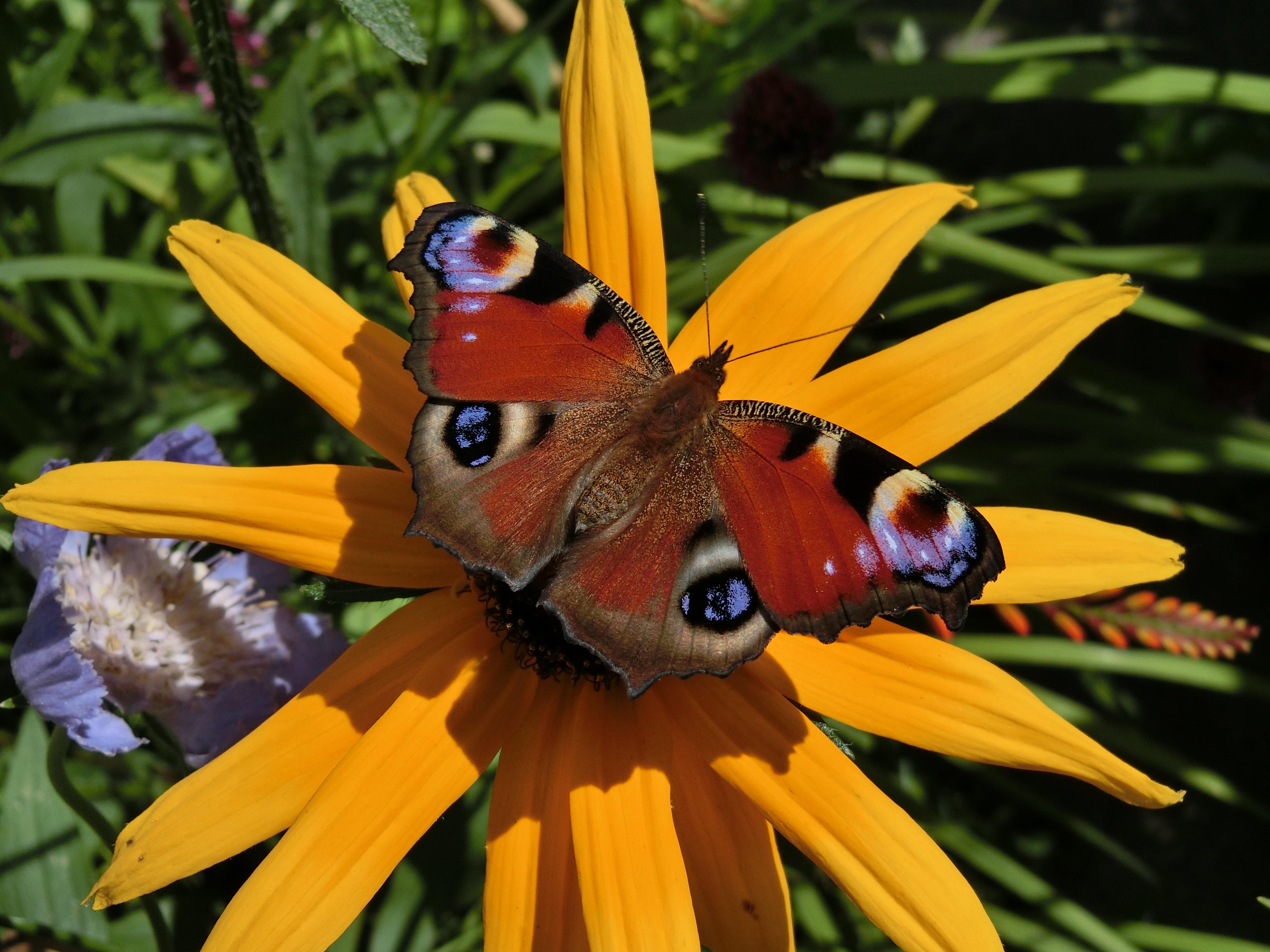 Images gratuites la nature fleur insecte botanique for Papillon jardin botanique 2015