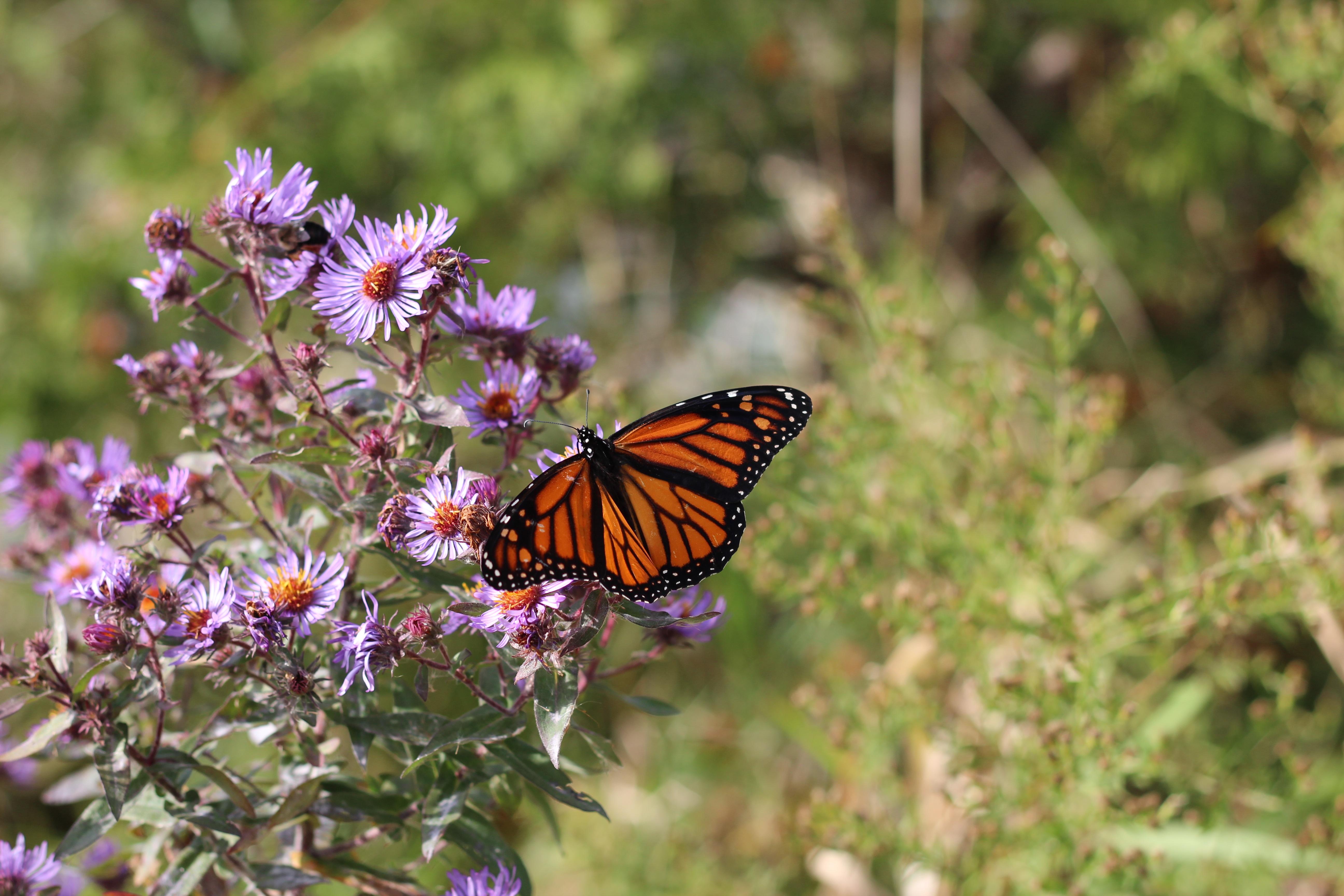 Free Images  nature, flower, wildlife, insect, botany