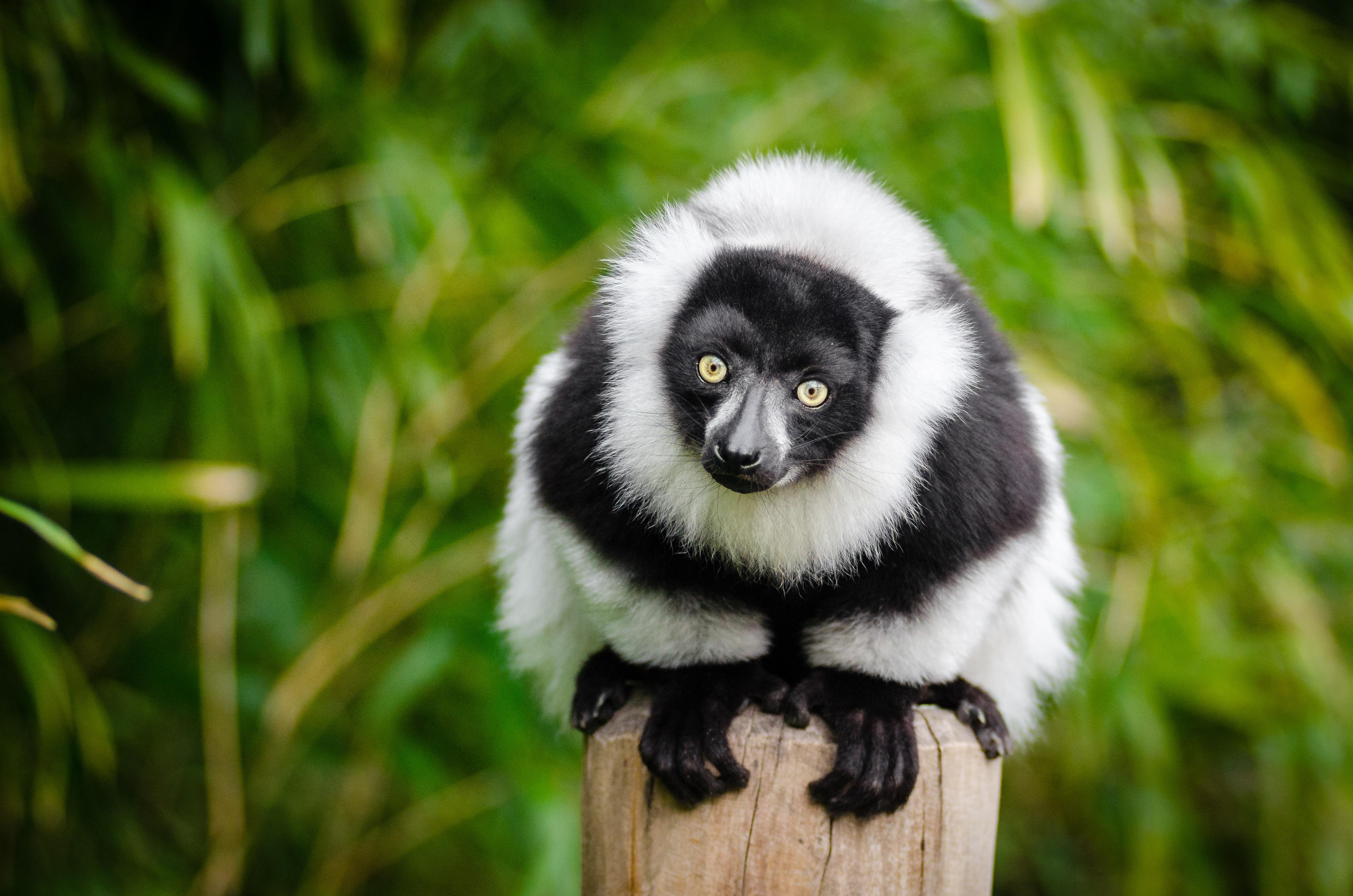foto de Images Gratuites : la nature, animal, mignonne, faune, portrait ...