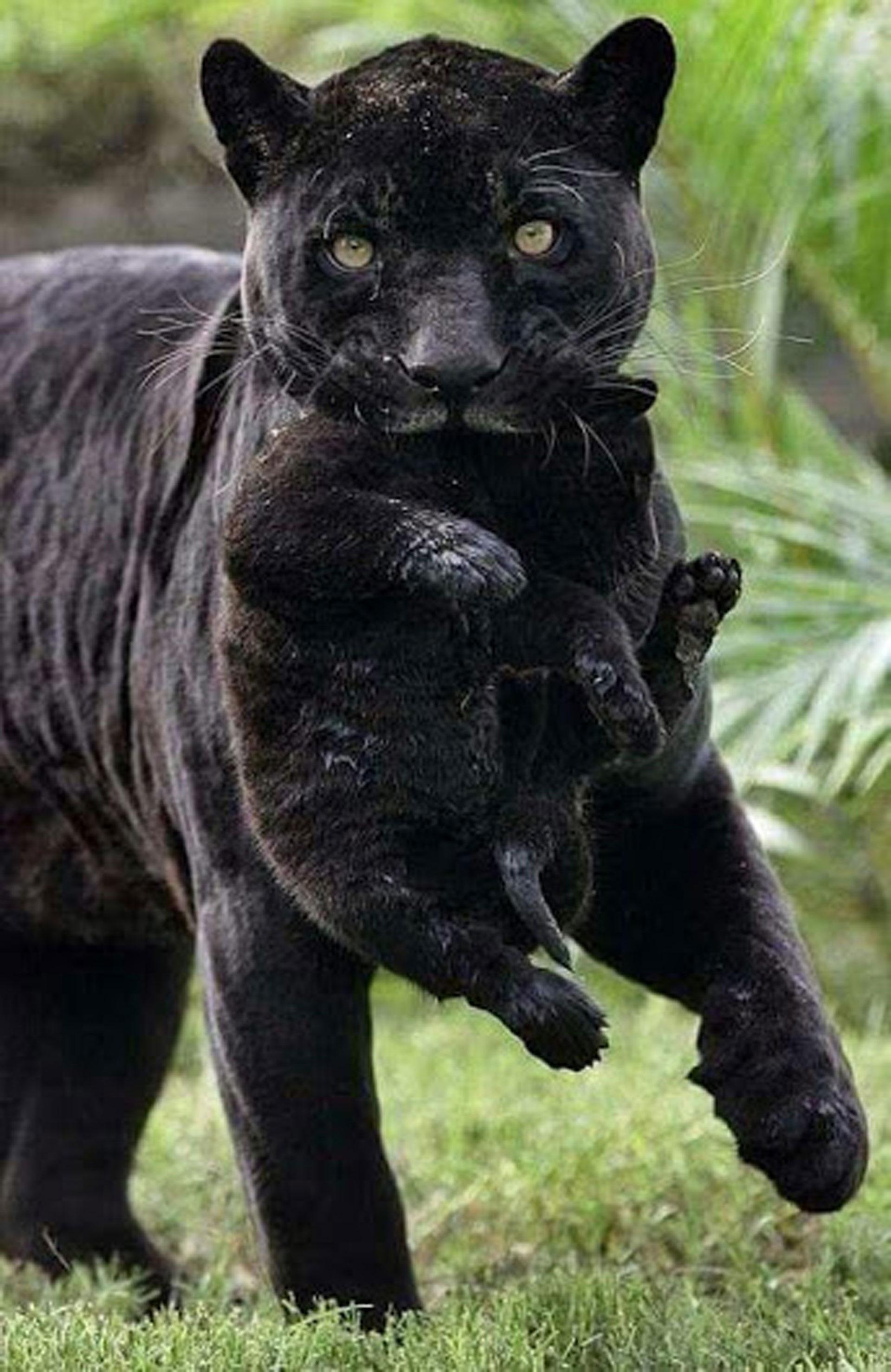 Bien connu Images Gratuites : la nature, forêt, animal, faune, sauvage, vert  DM94