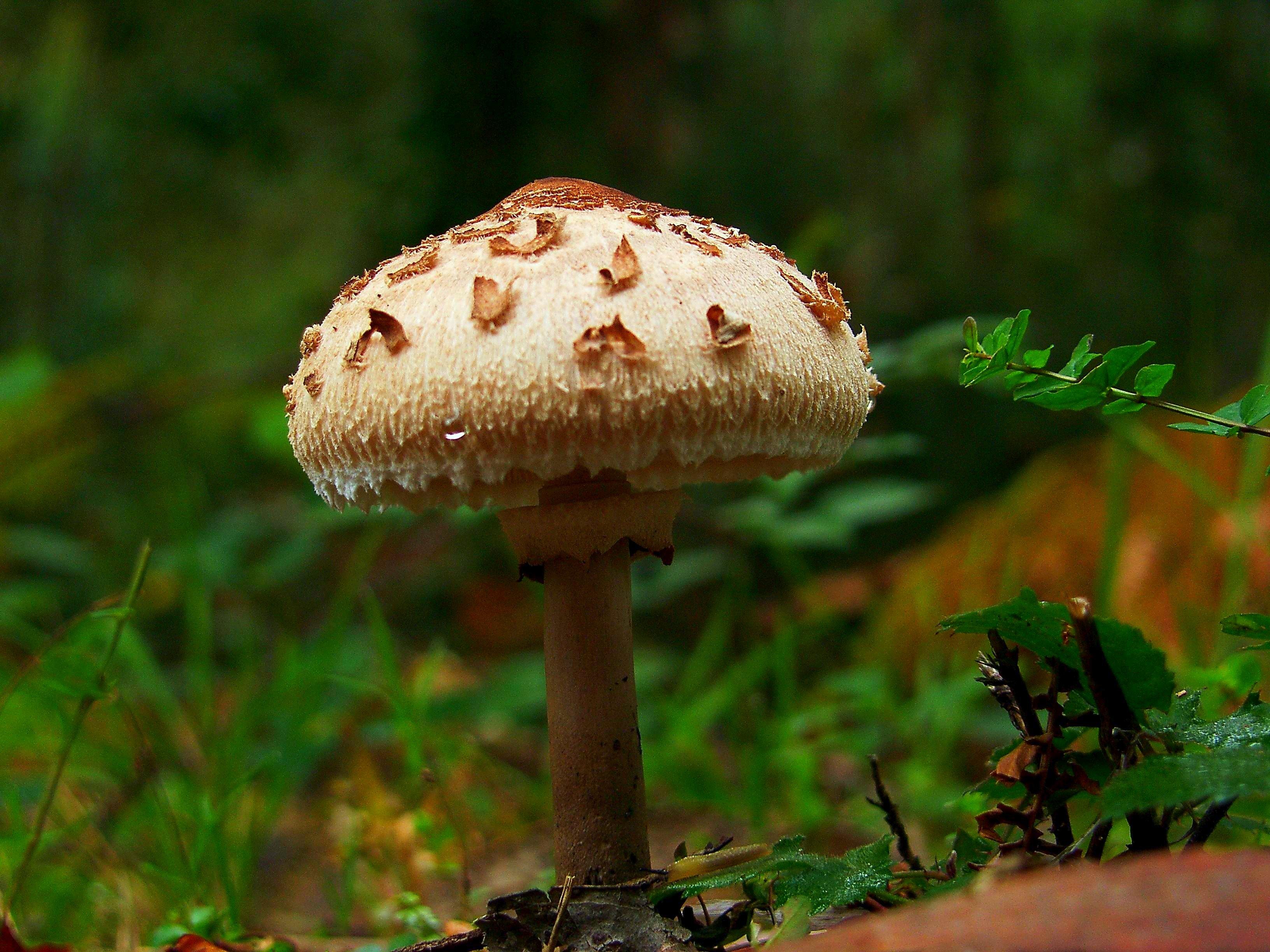 Нужны картинки грибов