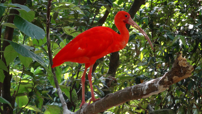 Животные и растения тропические леса картинки