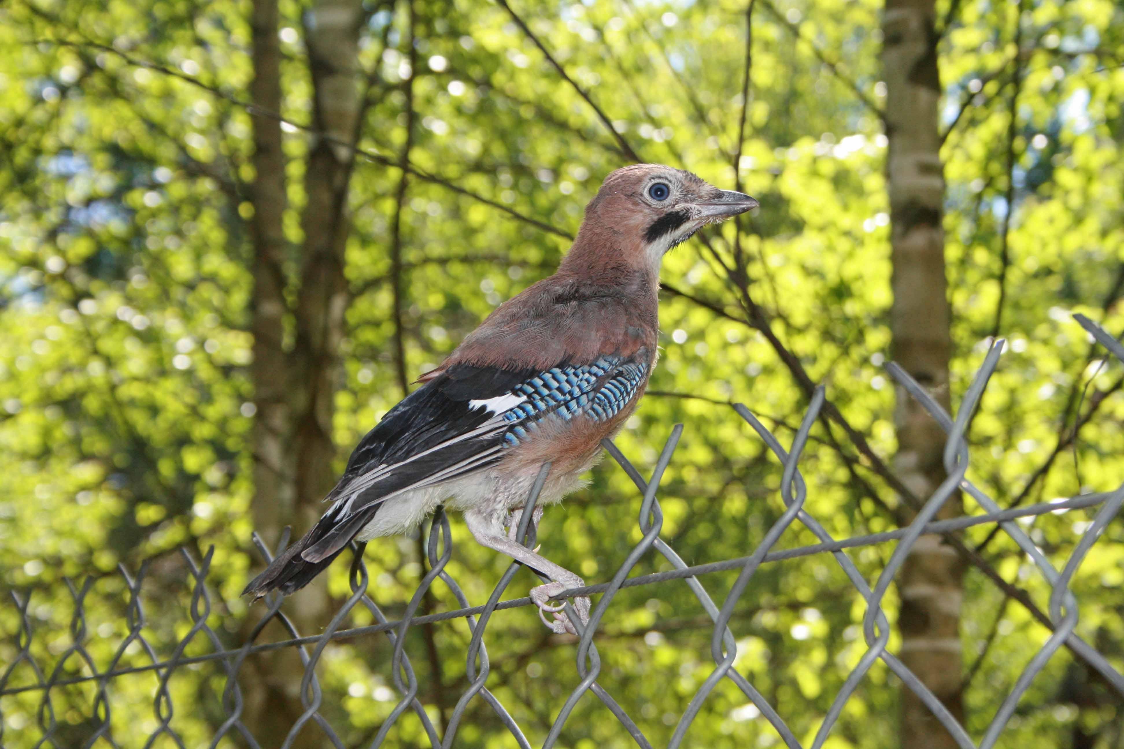 лесные птицы фото с названиями пензы вкусно, атмосфера приятная