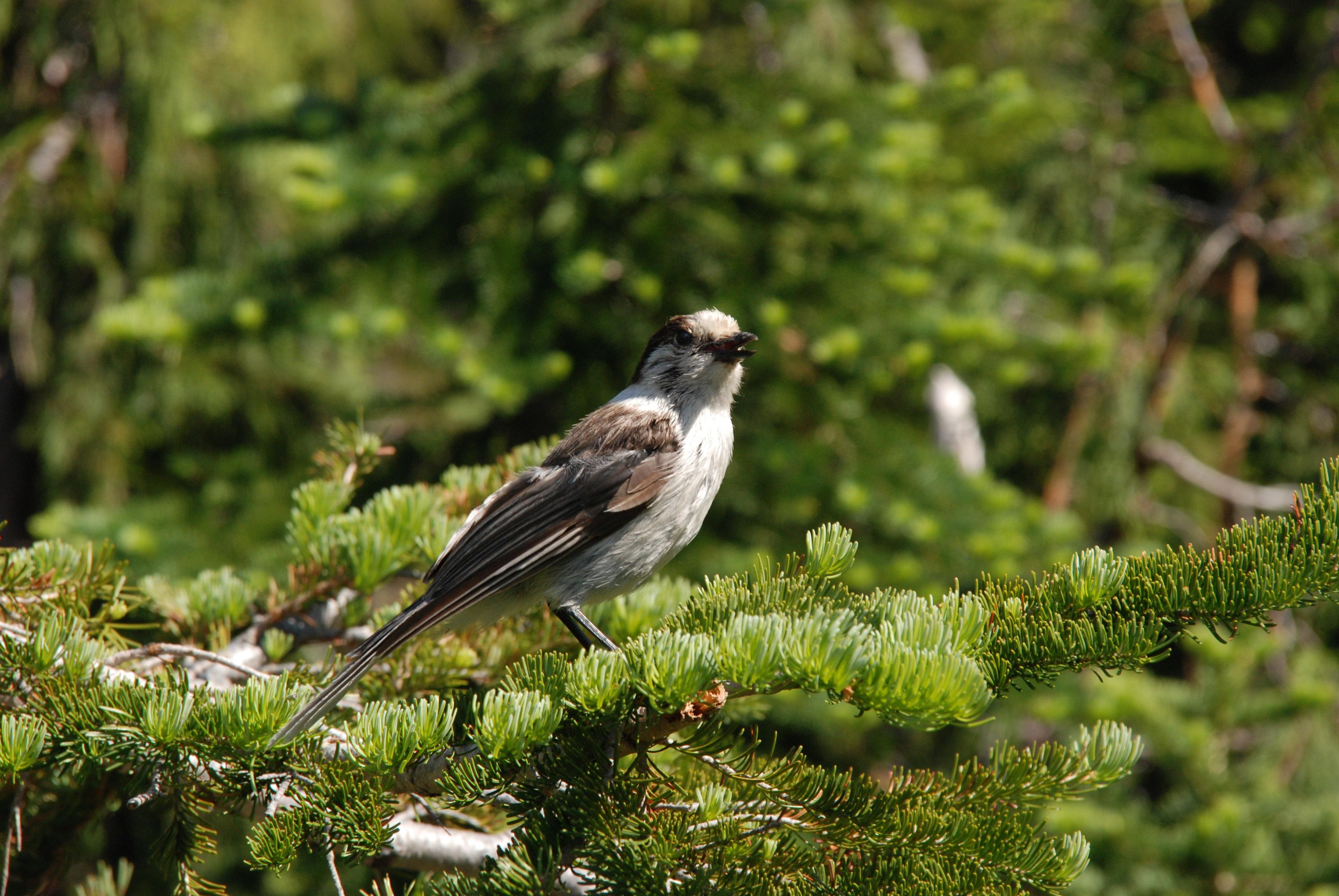 картинки с лесными птичками просмотра планет можно