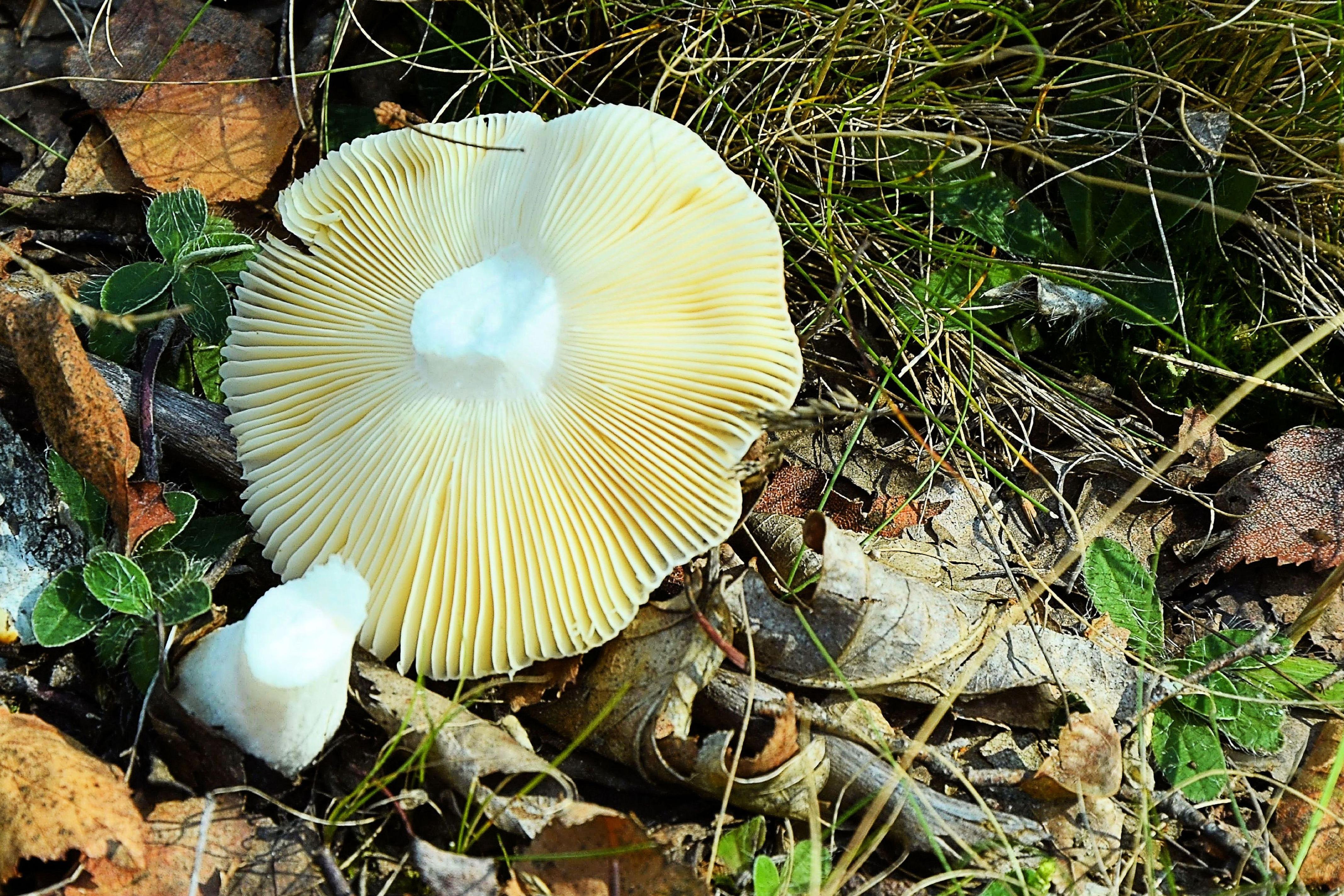 все грибы россии фото покрытого