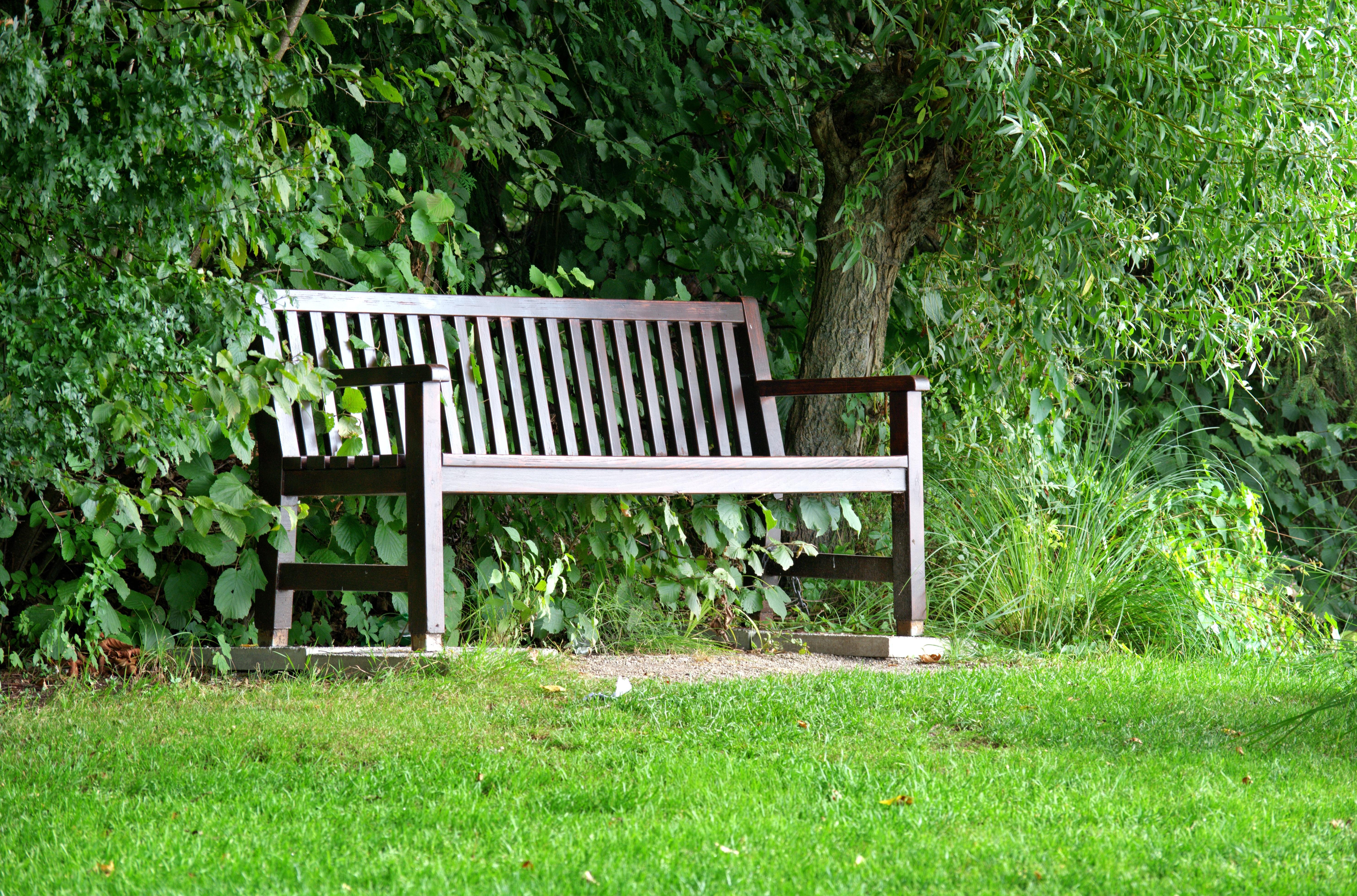 Fotos gratis : naturaleza, bosque, césped, banco, asiento, idílico ...
