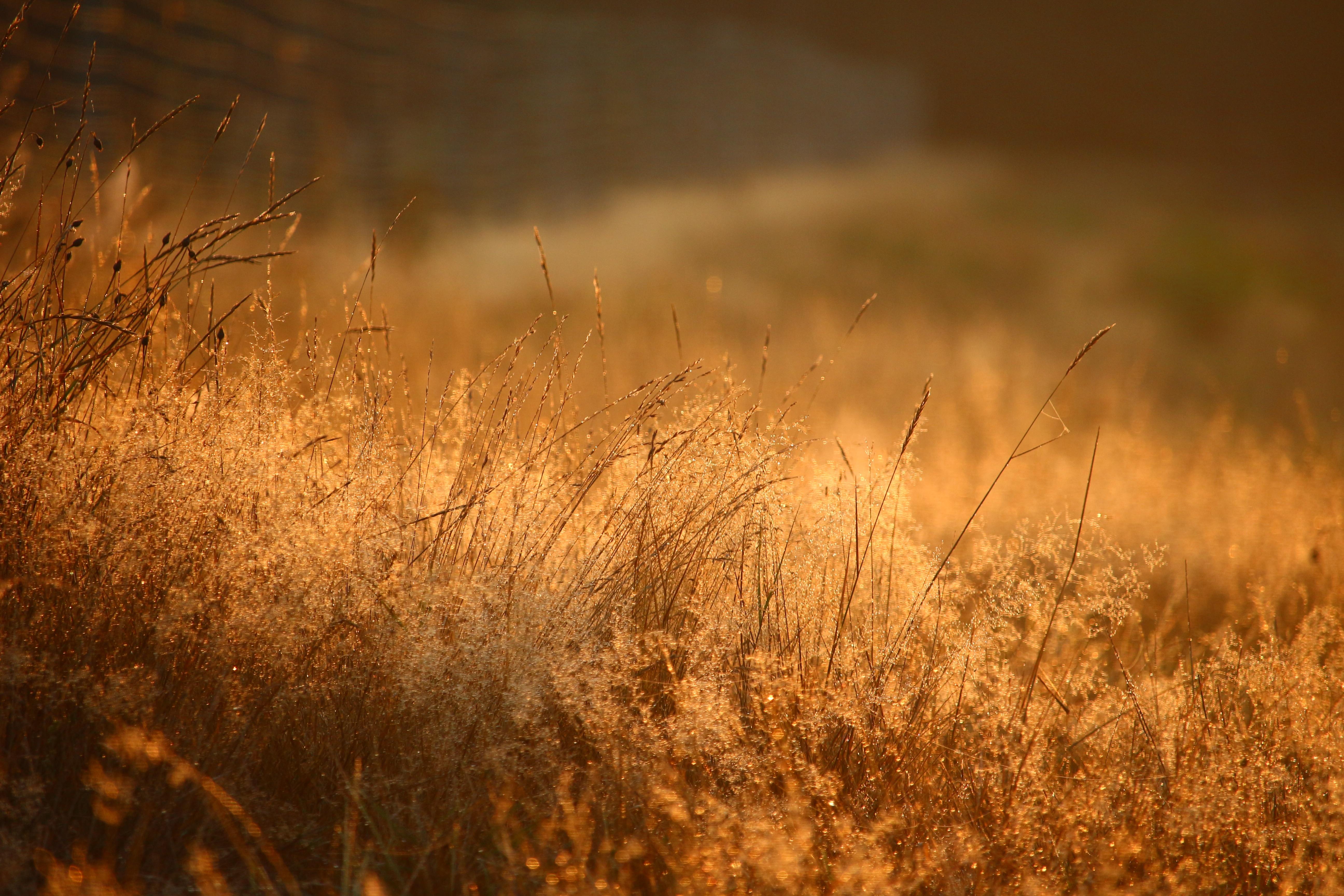 Травы осенью картинки