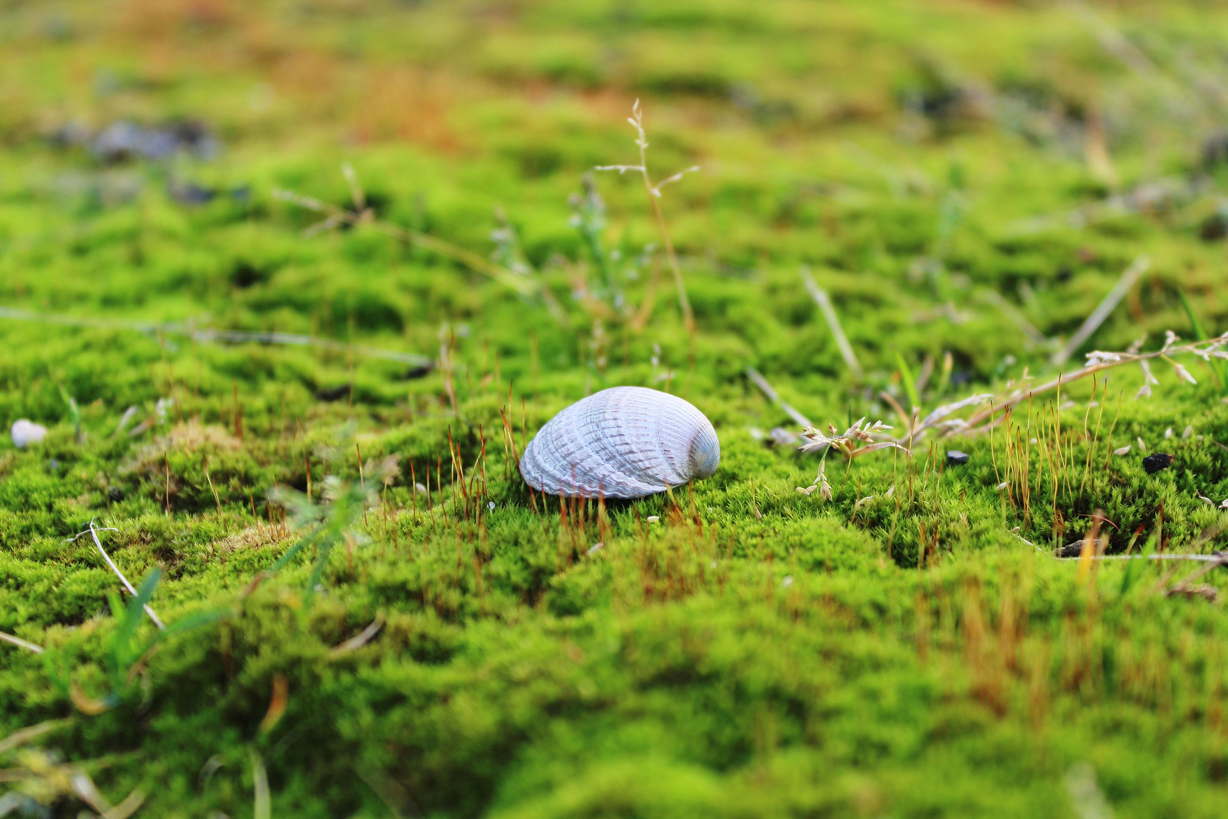 grass macro photography - photo #38