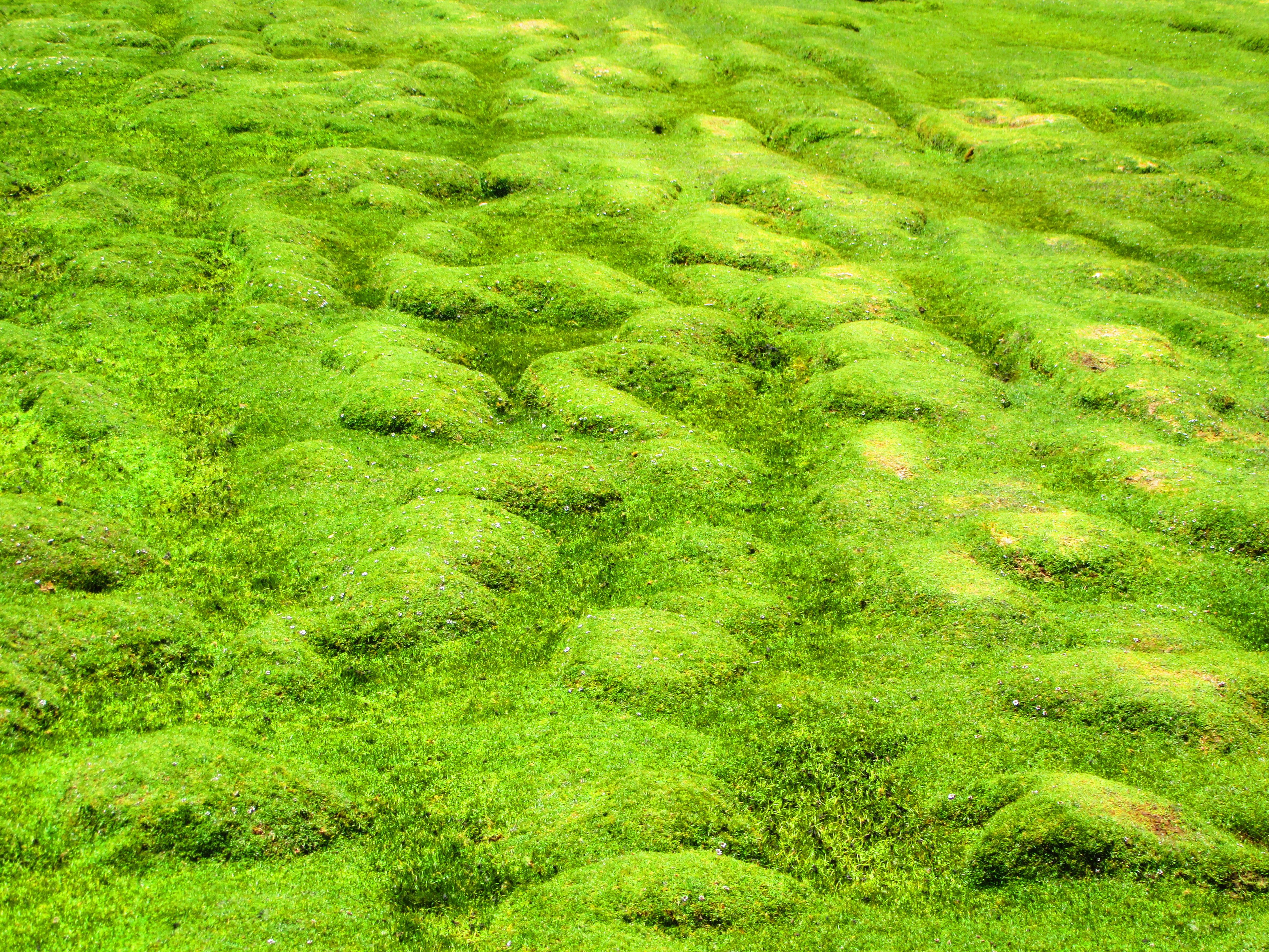 images gratuites la nature for t herbe plante sol pelouse prairie feuille fleur. Black Bedroom Furniture Sets. Home Design Ideas