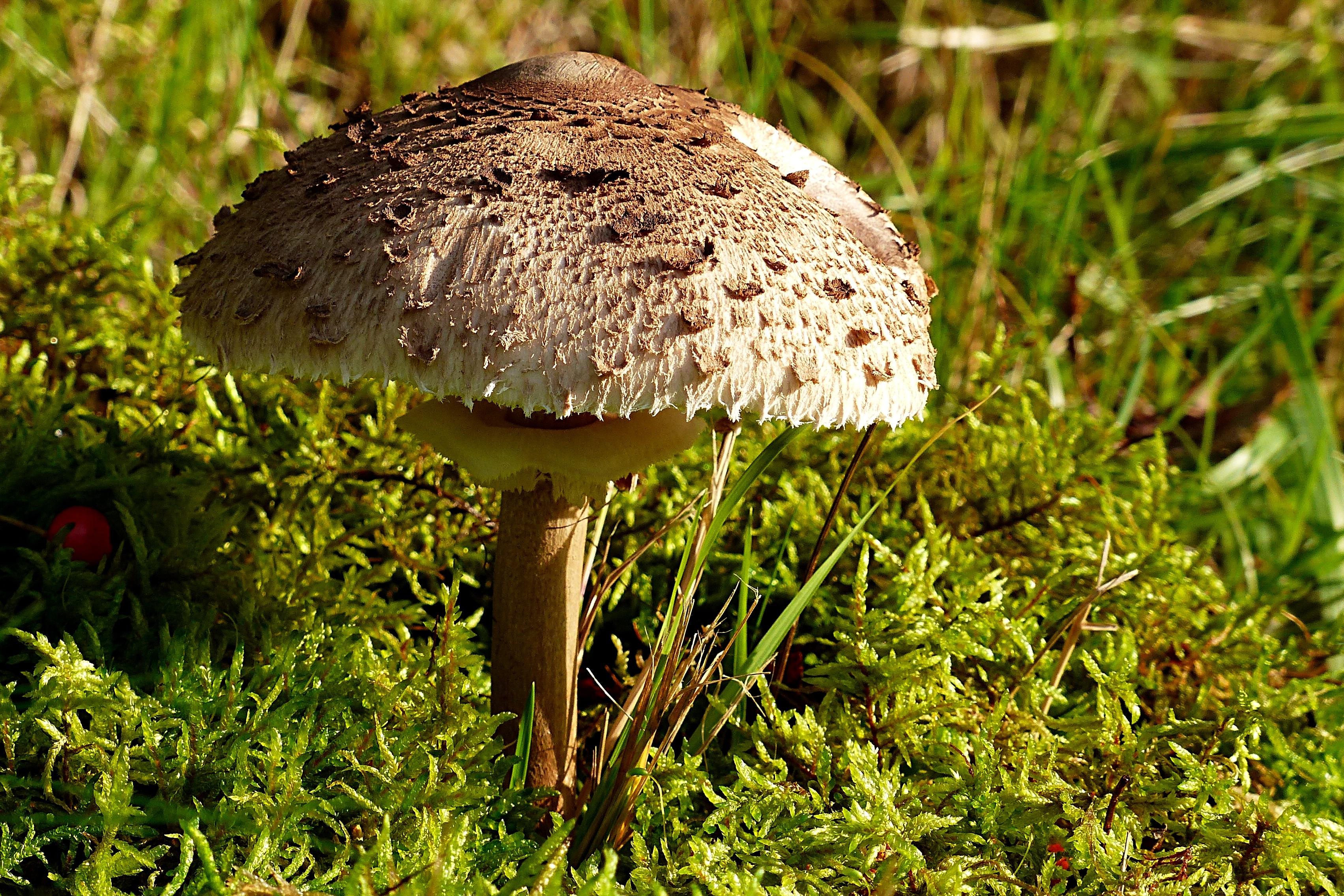 имеет грибы леса фото и названия каждого дресс-кода