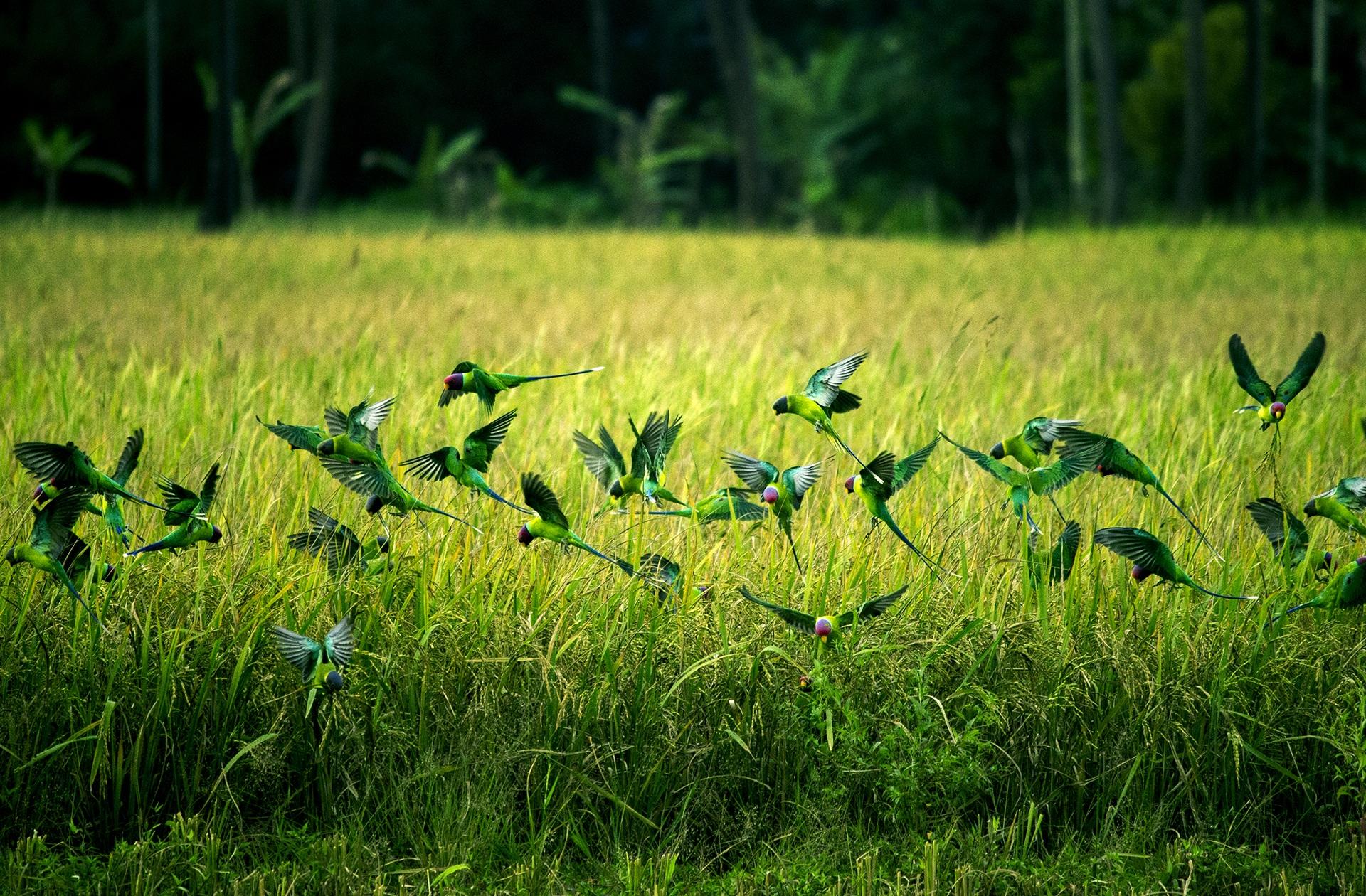 птицы лесов и полей все больше сближаются с людьми