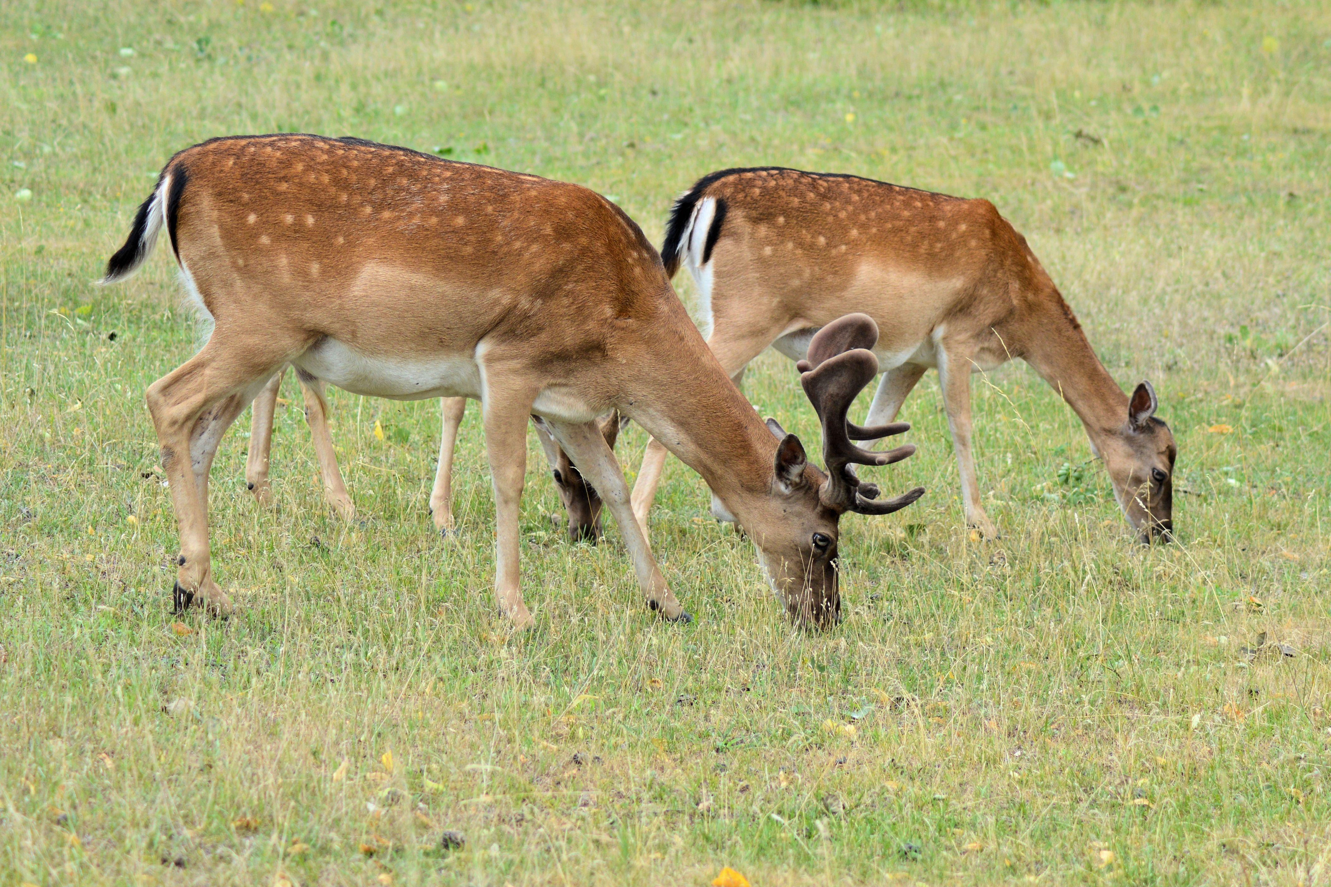 Fotos gratis : naturaleza, bosque, prado, pradera, fauna ...