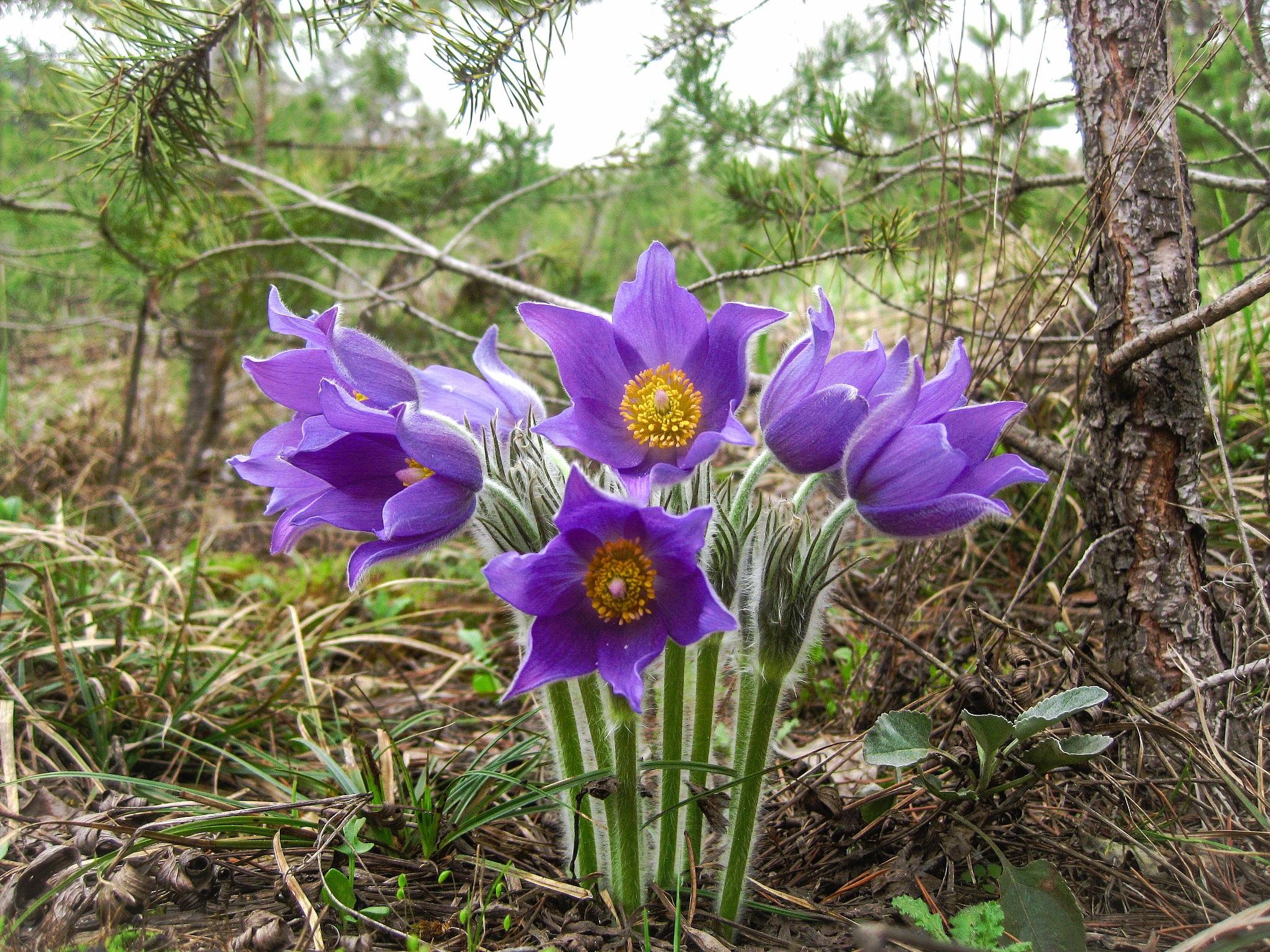 глазурь лесные цветы украины фото и названия однотонный желтый маникюр