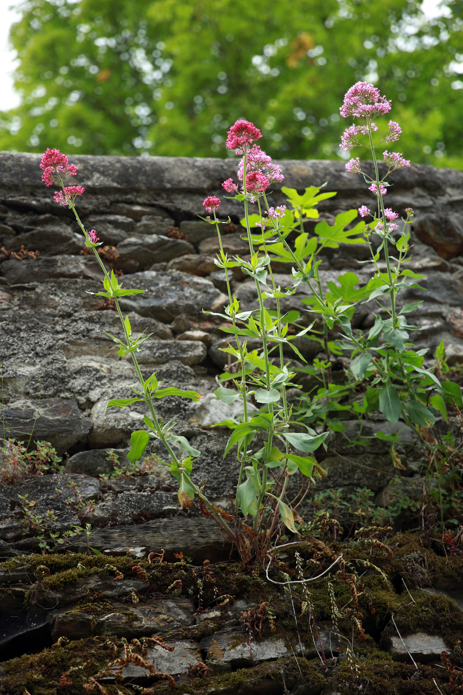 Gratuites la nature forªt feuille mur vert herbe l