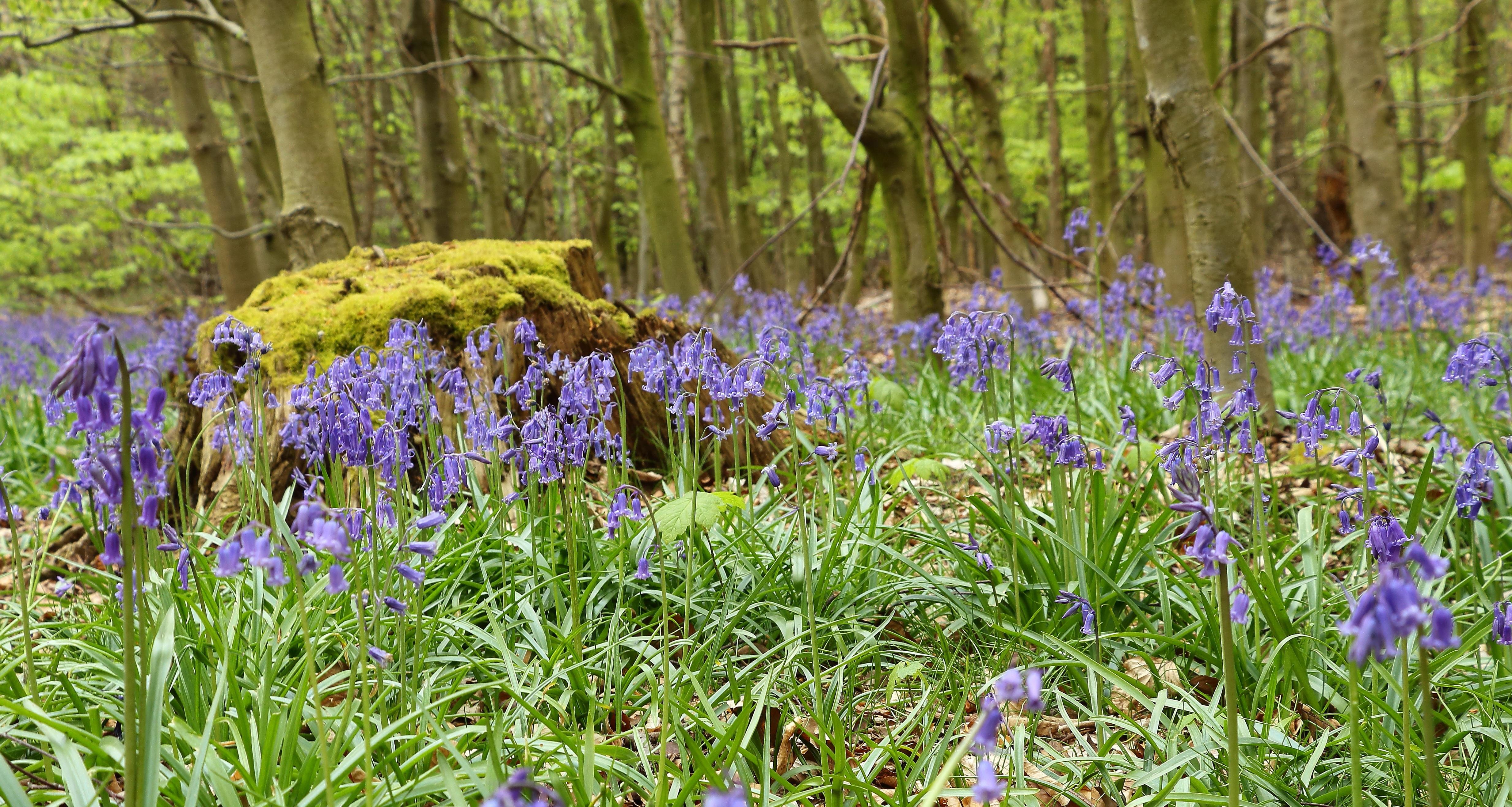 Лесные цветы цветущие в мае-июне - SurvivalPanda