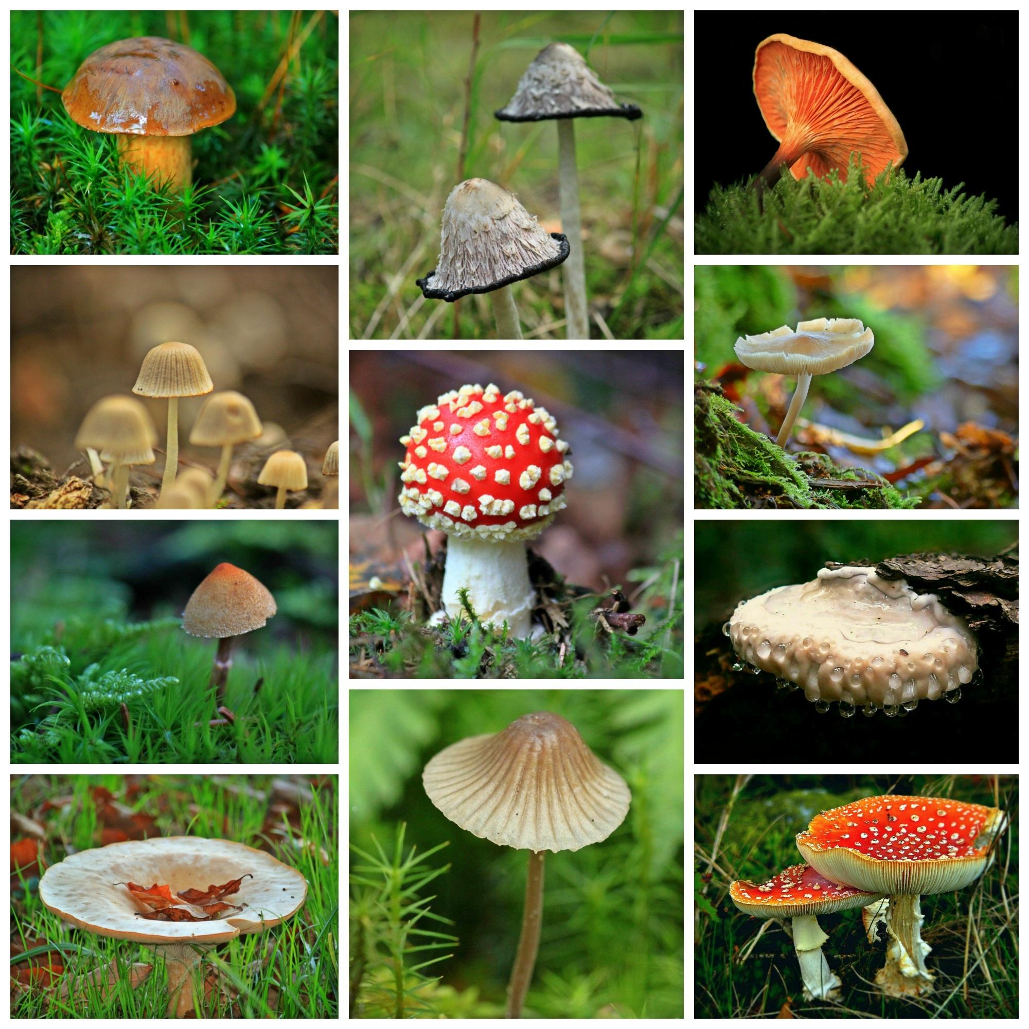 фото и названия всех видов грибов хорошей рекламе конноспортивном