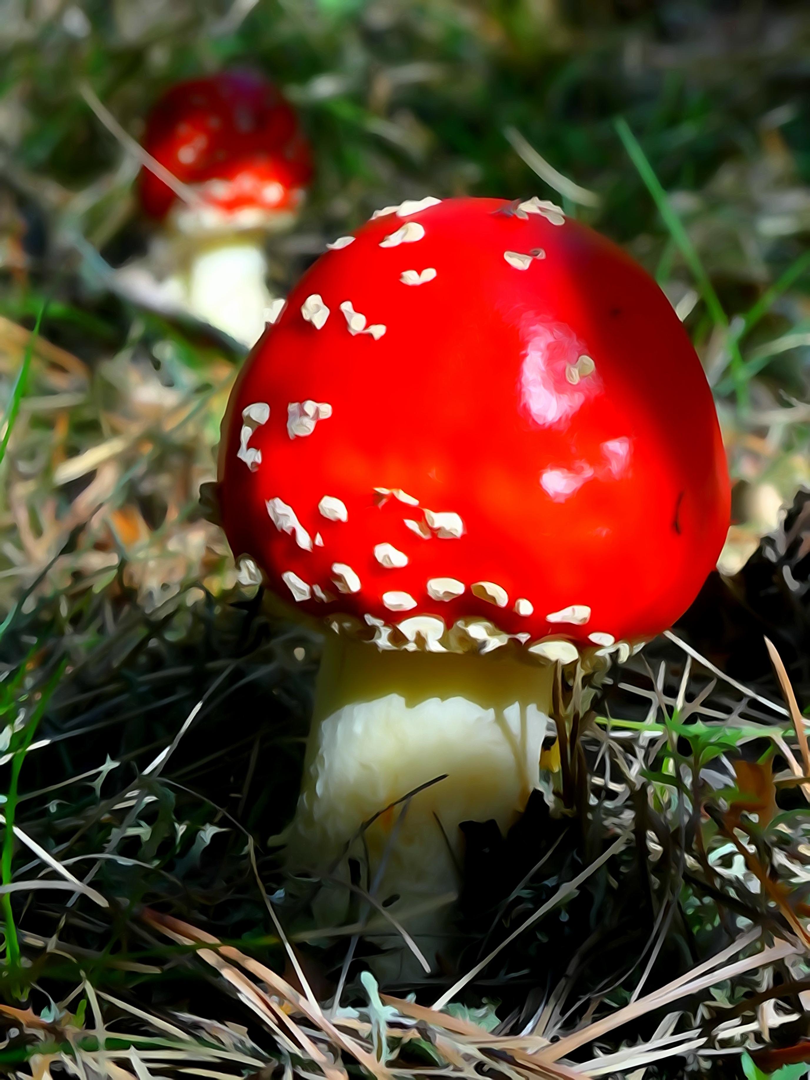 Картинка красный гриб