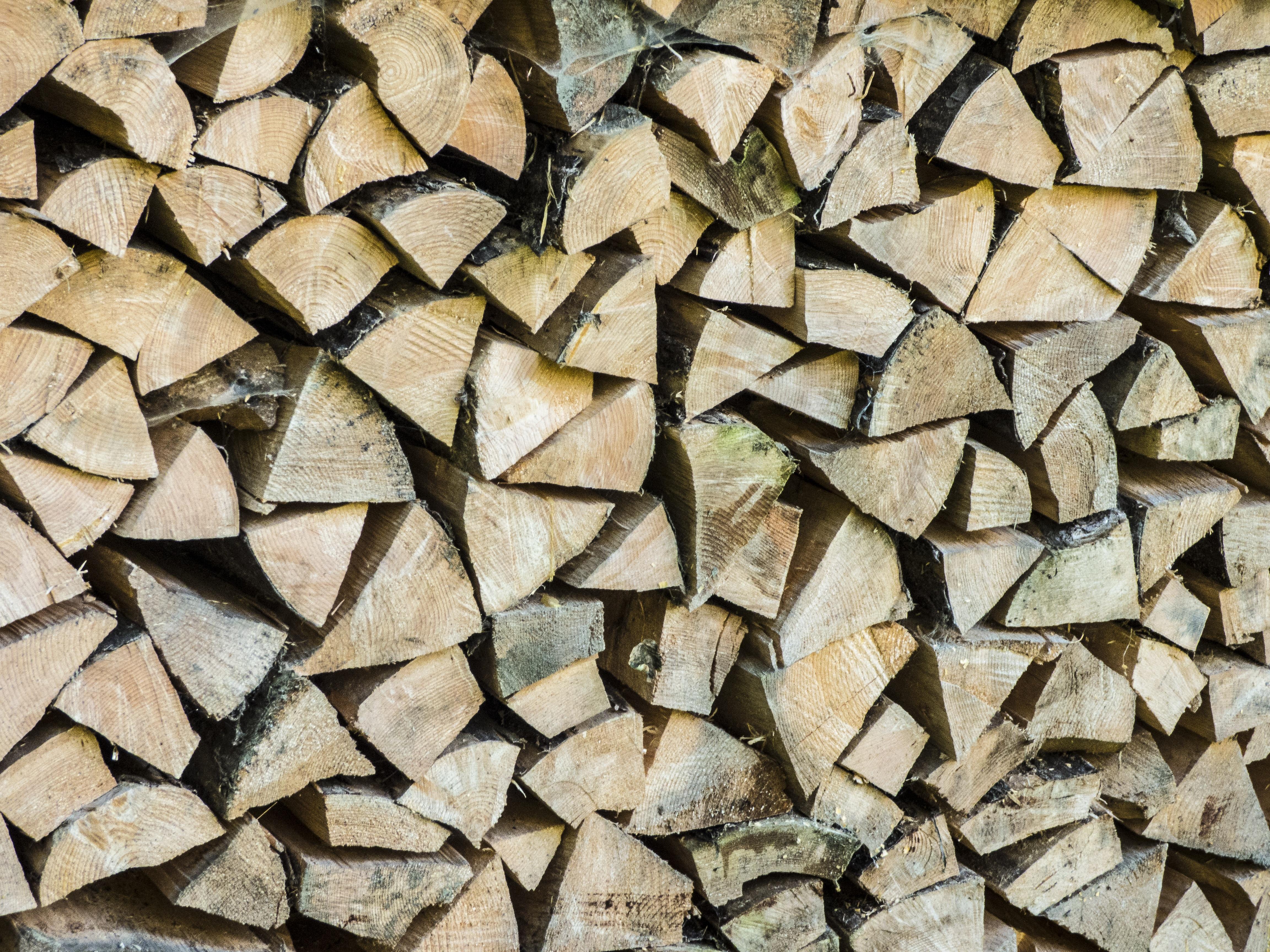 free images nature forest rock wood texture leaf floor