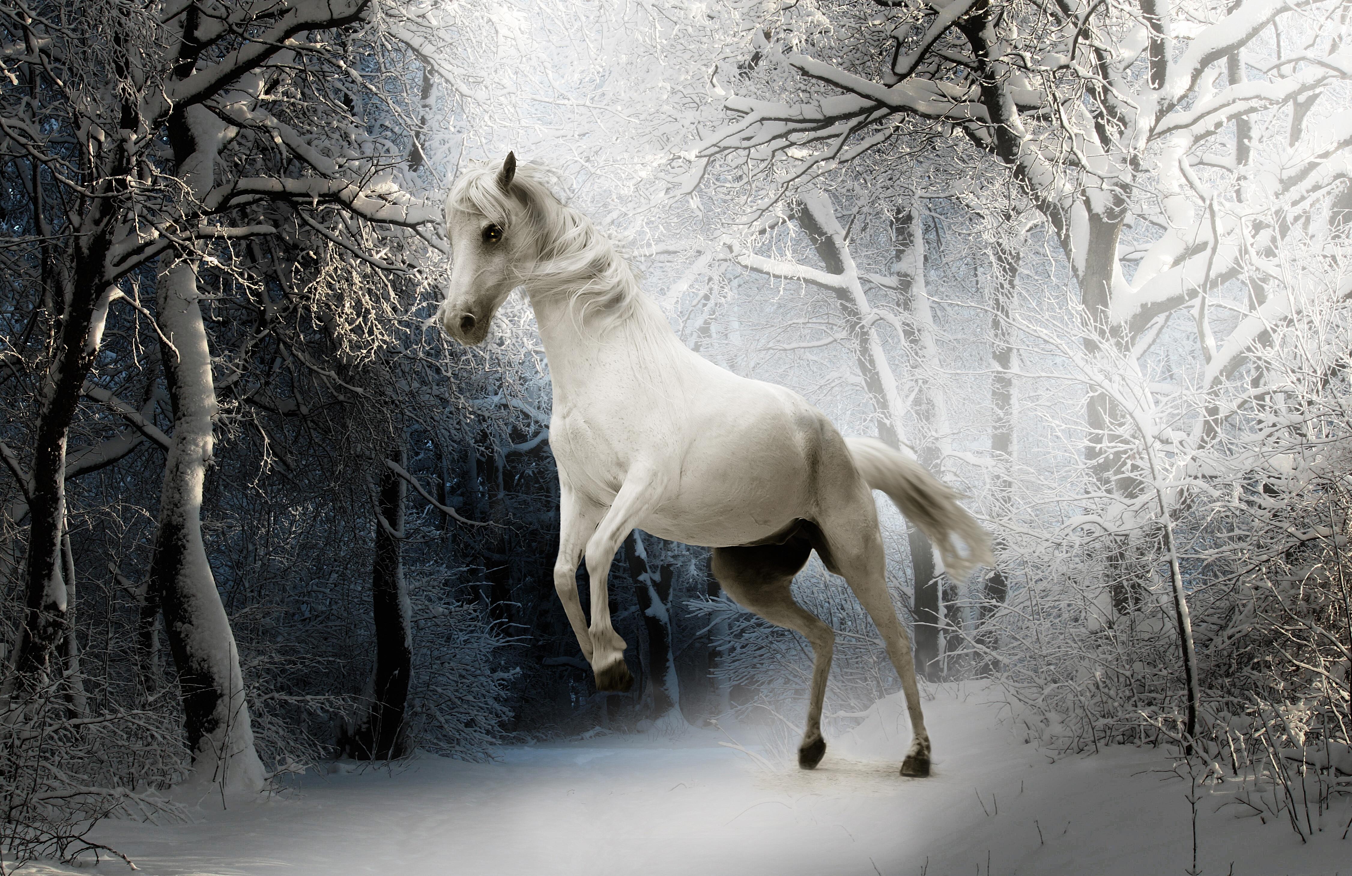 images gratuites la nature for t neige du froid hiver blanc animal la glace m t o. Black Bedroom Furniture Sets. Home Design Ideas