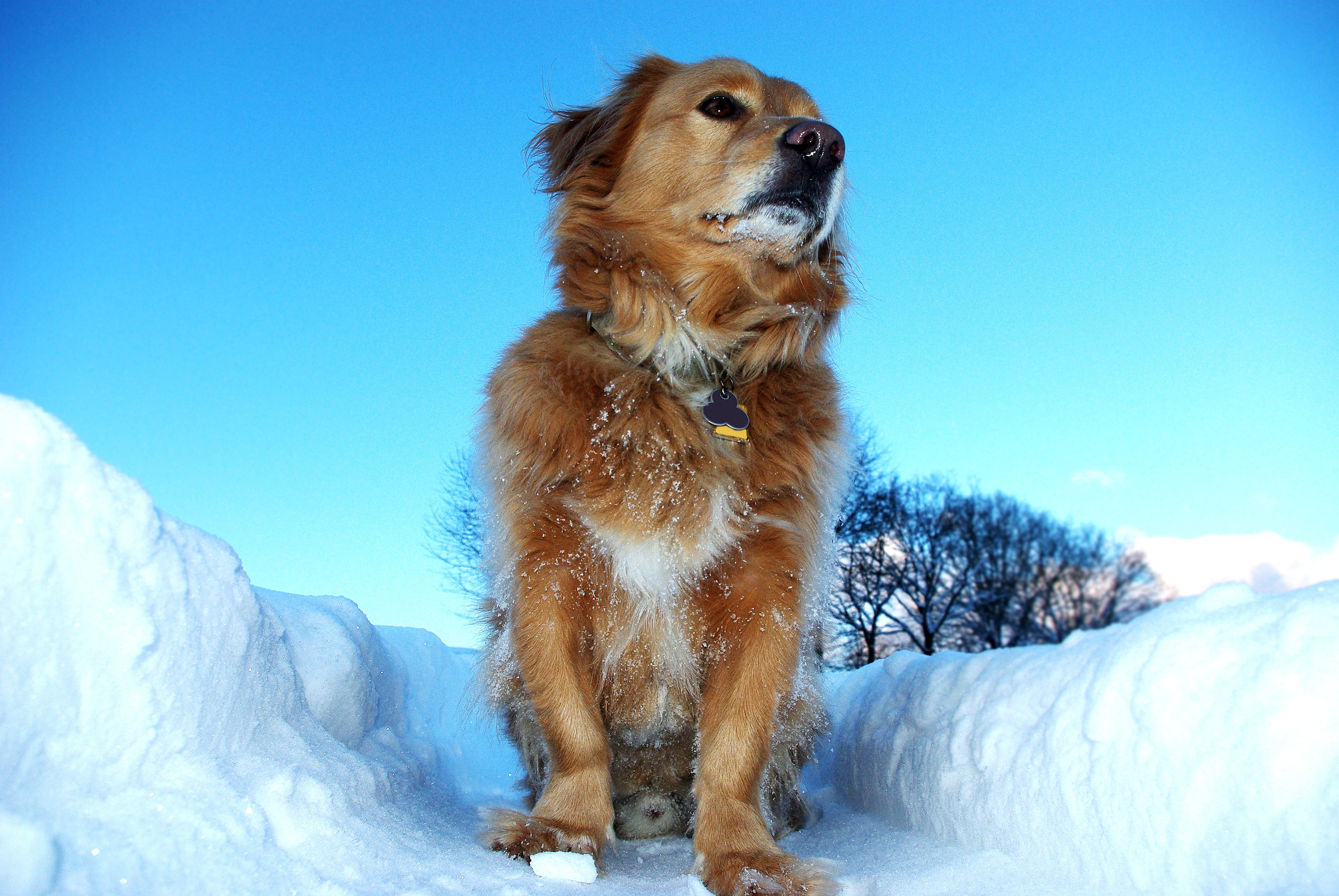 Фото собак зимой фото