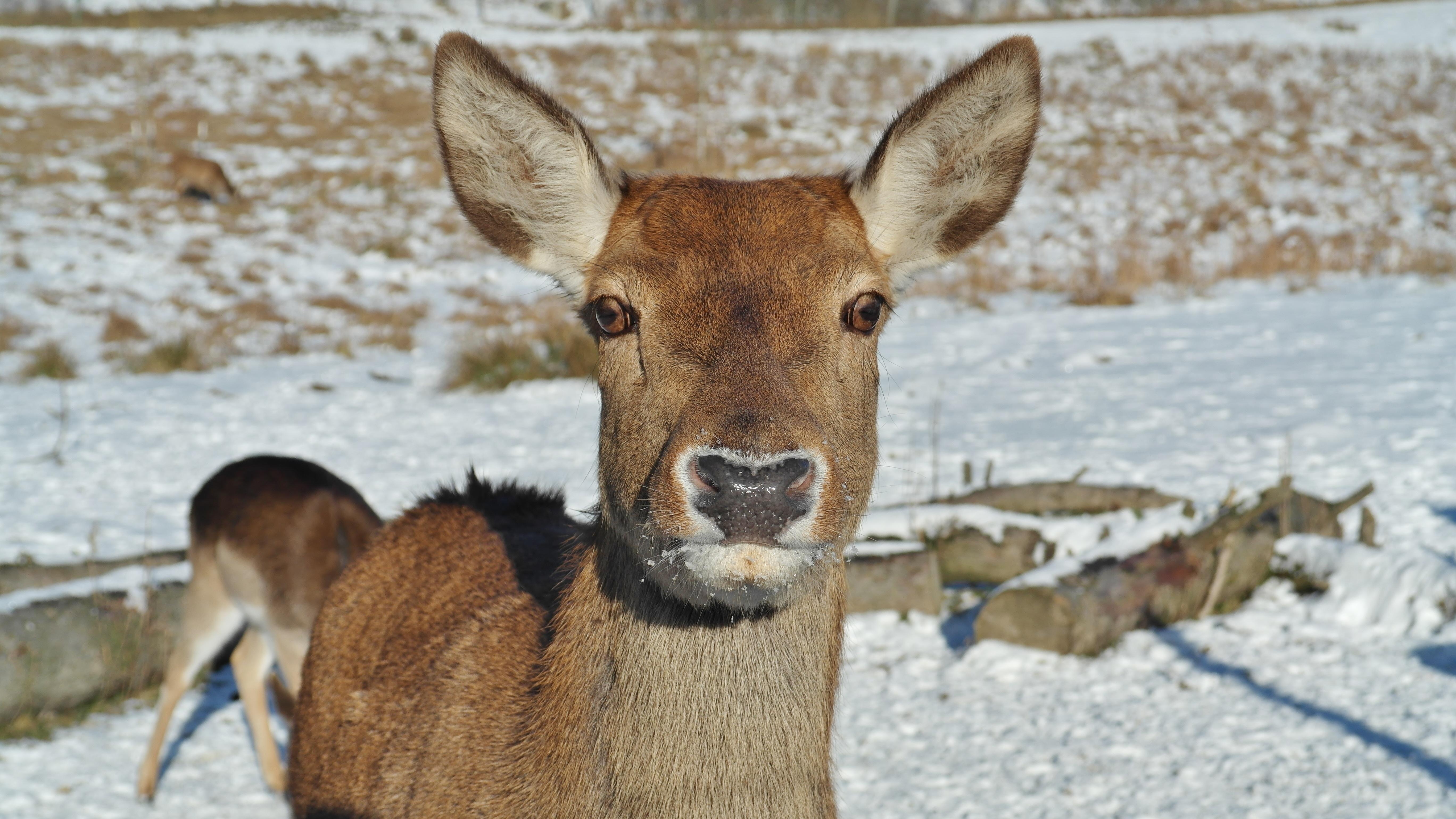 Images gratuites la nature for t neige hiver sauvage - Images d animaux sauvages gratuites ...