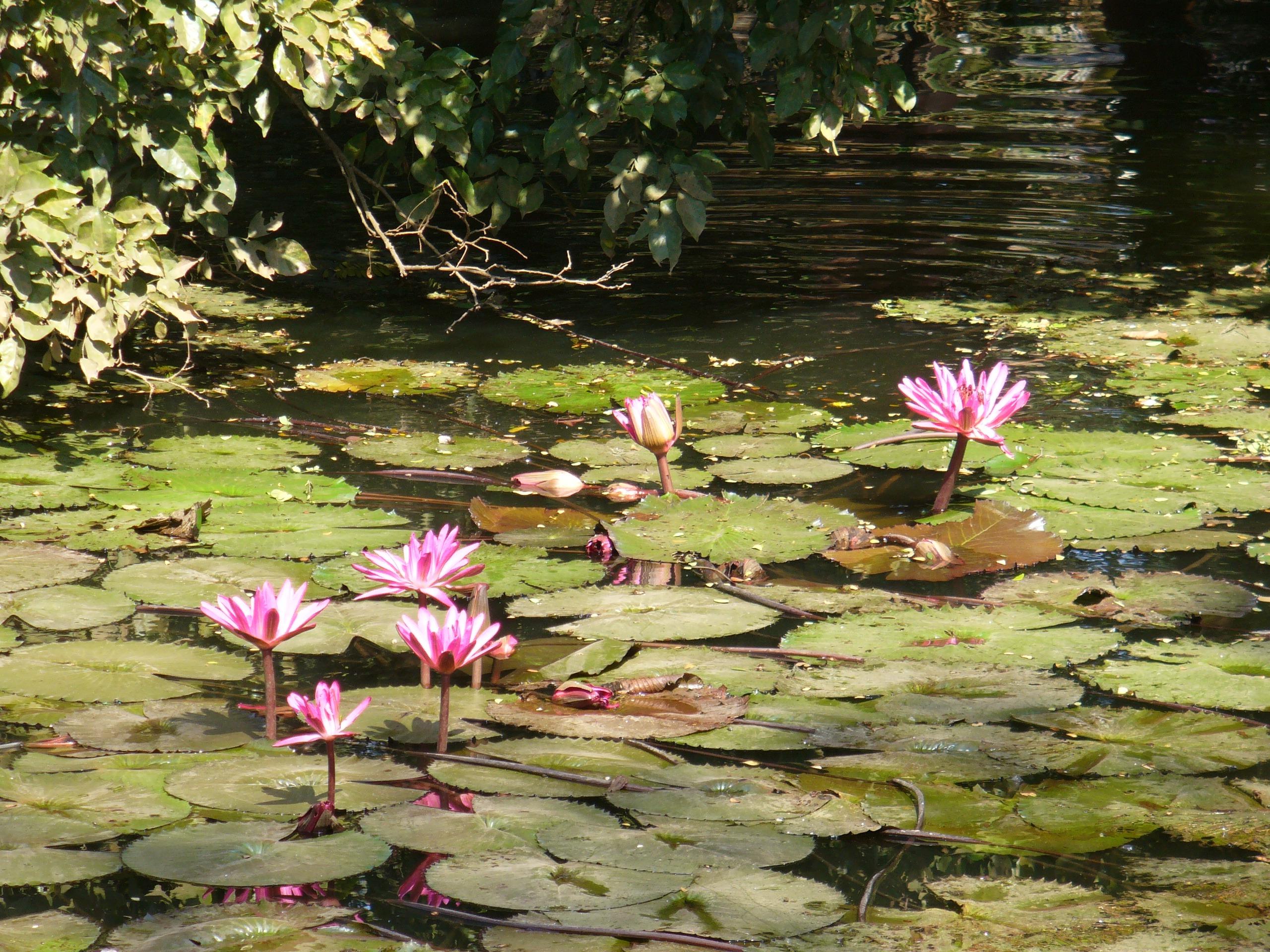 Gratuites la nature forªt marais fleur plante