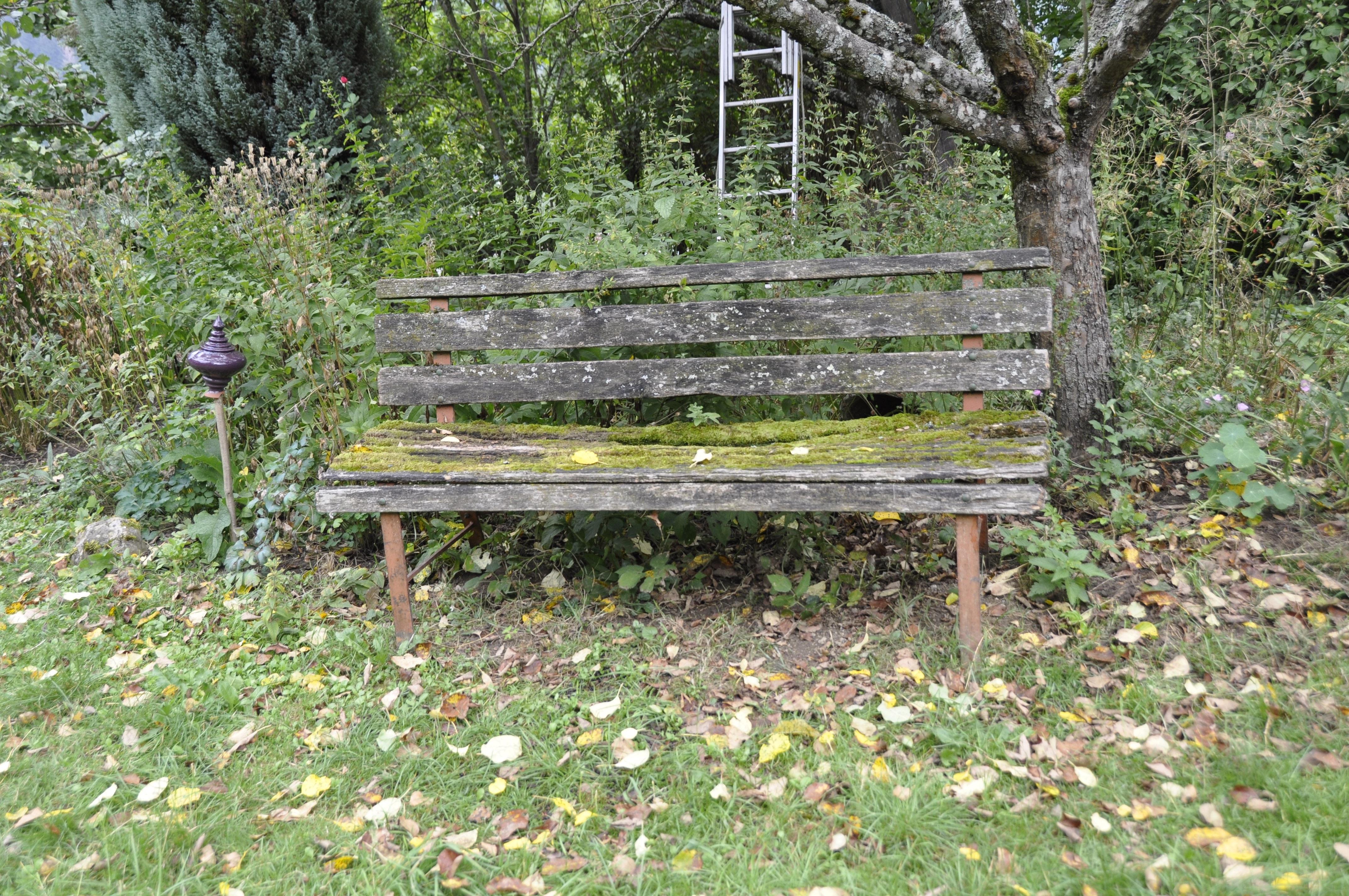 Fotos gratis : naturaleza, bosque, sendero, banco, prado, musgo ...