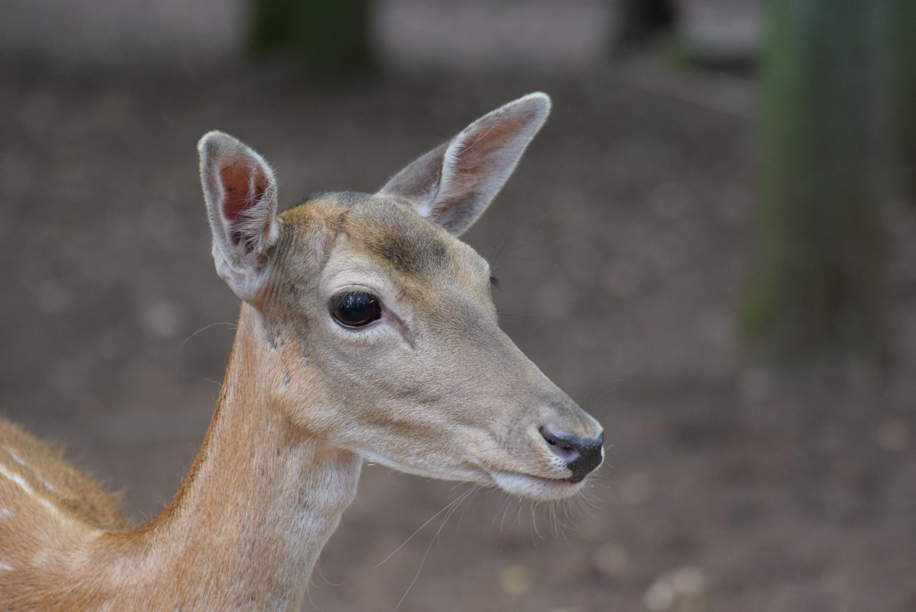 Free nature forest wildlife wild mammal fauna animals