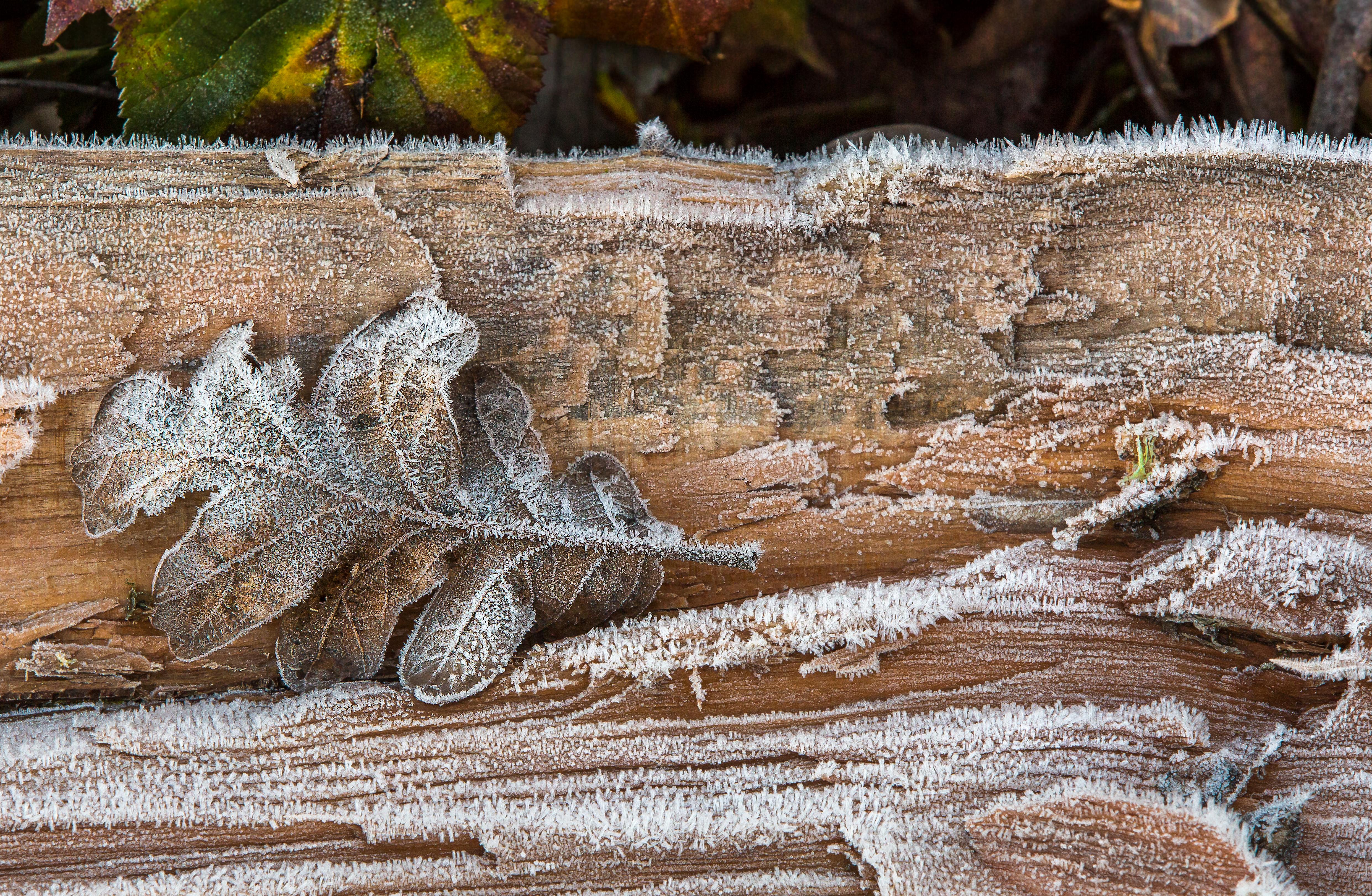 Kostenlose foto : Natur, Wald, Winter, Holz, Blatt, Frost, Tierwelt ...