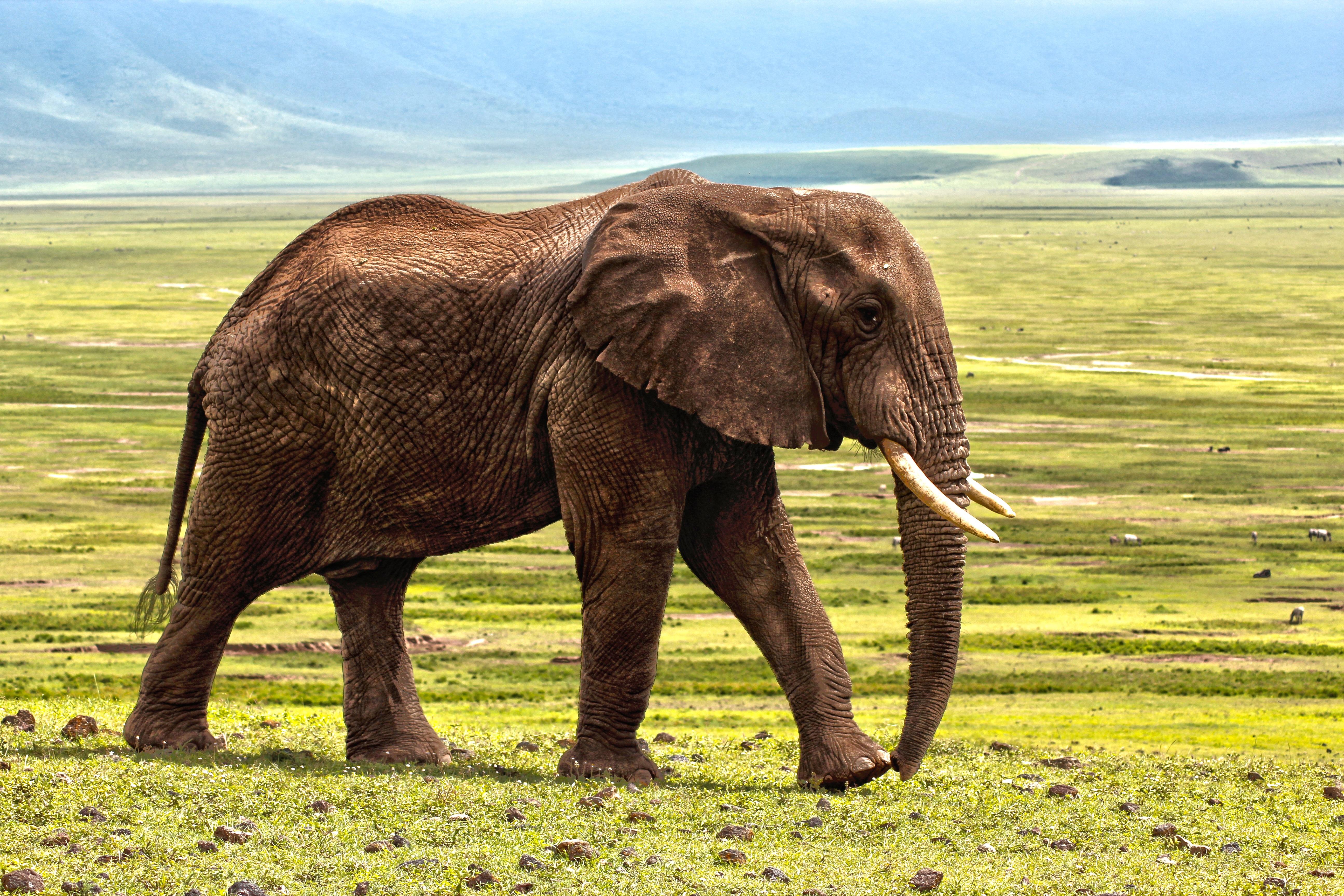 Images Gratuites La Nature Herbe Aventure Animal Faune Zoo