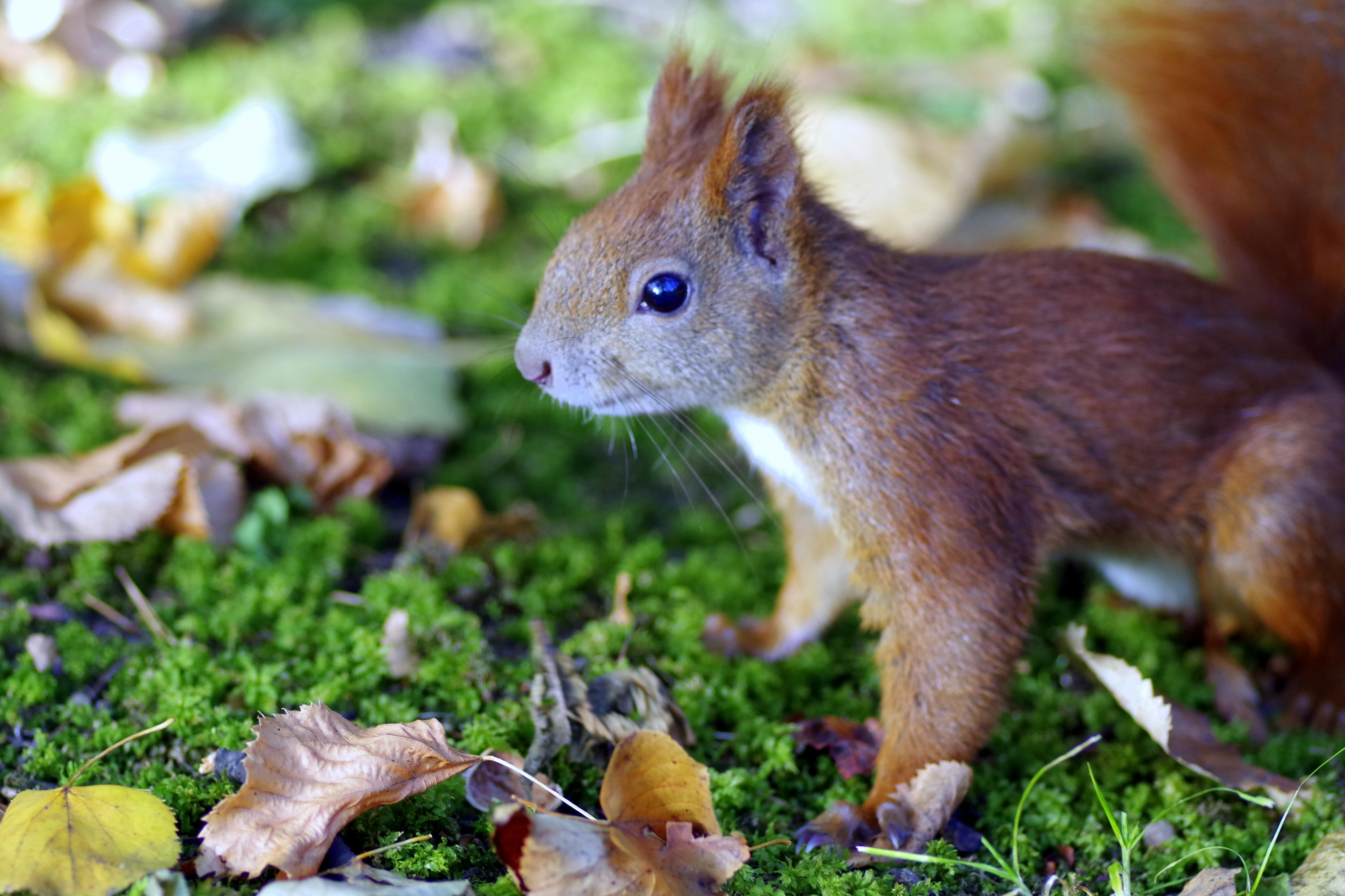 Images gratuites la nature herbe animal faune - Images d animaux sauvages gratuites ...