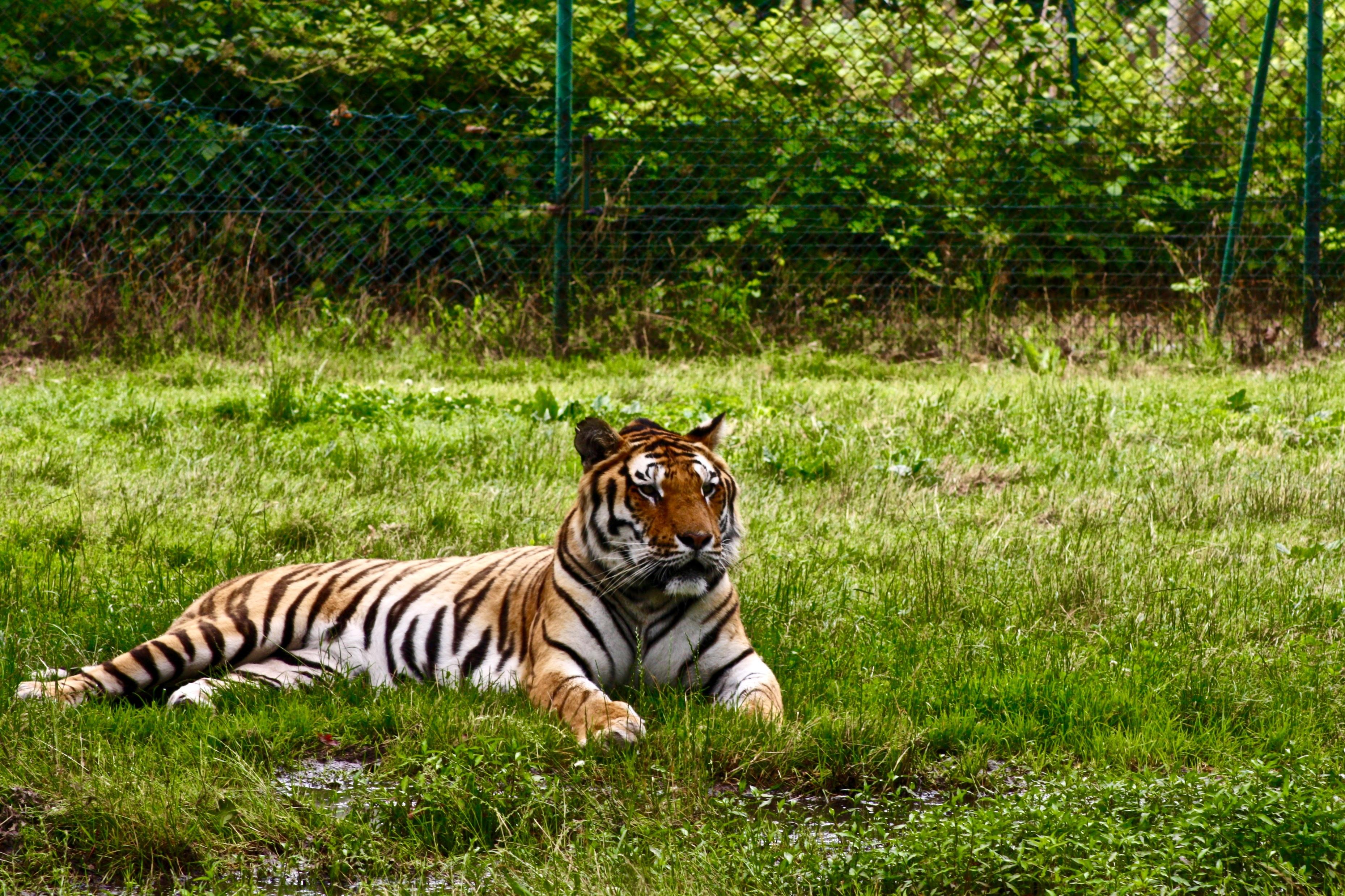 Fotos Animales Selva Animales De La Selva Azucar Flor