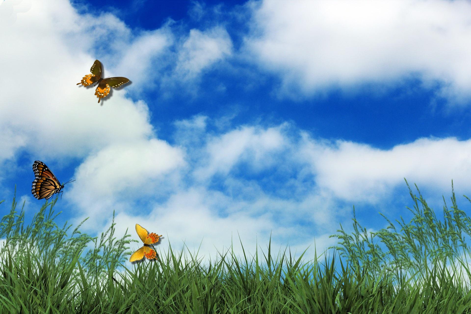 Картинка с птицей спасибо за внимание нужно нарушать