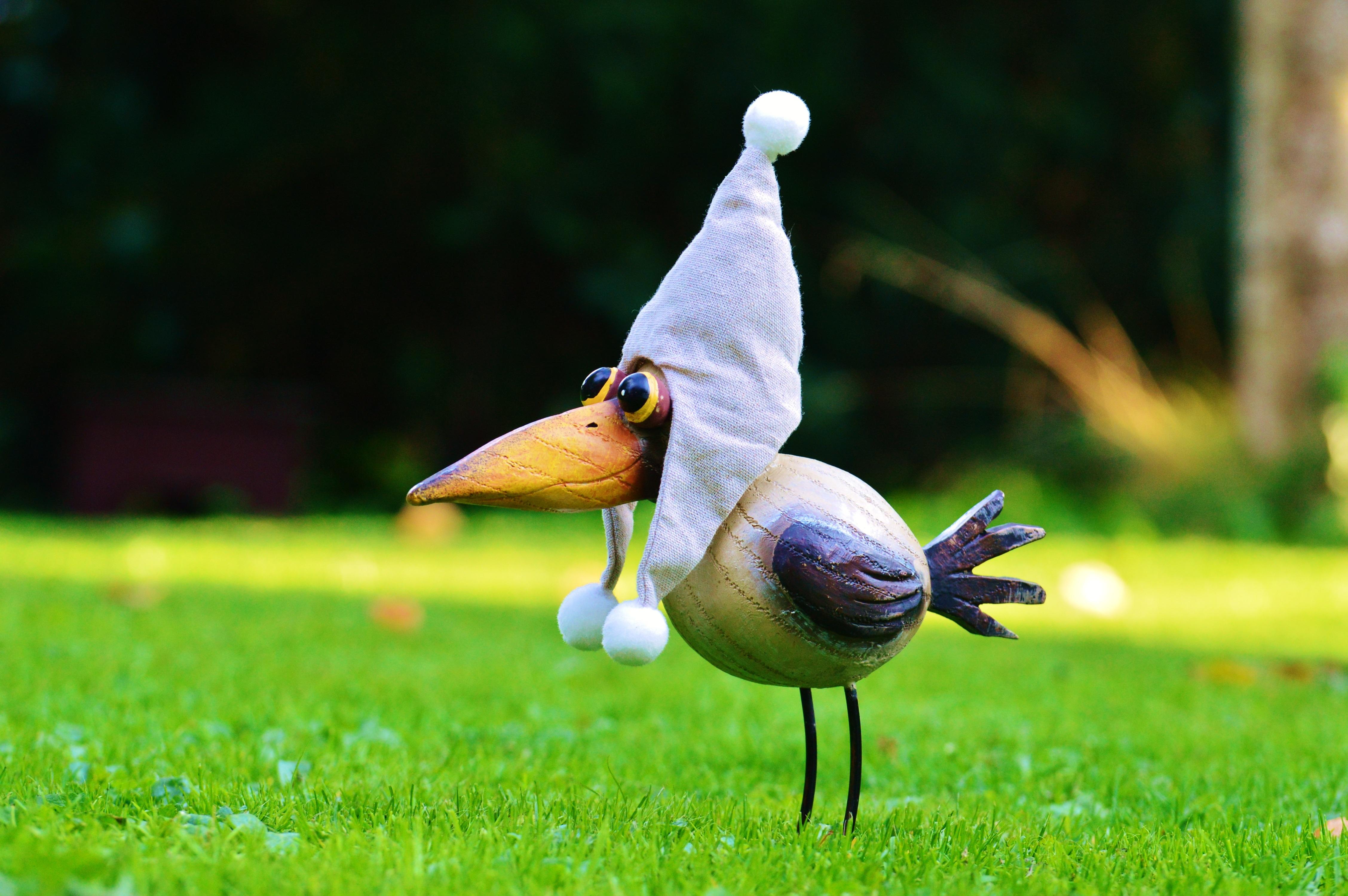 прикольное фото птички мозгоклюйки некоторые
