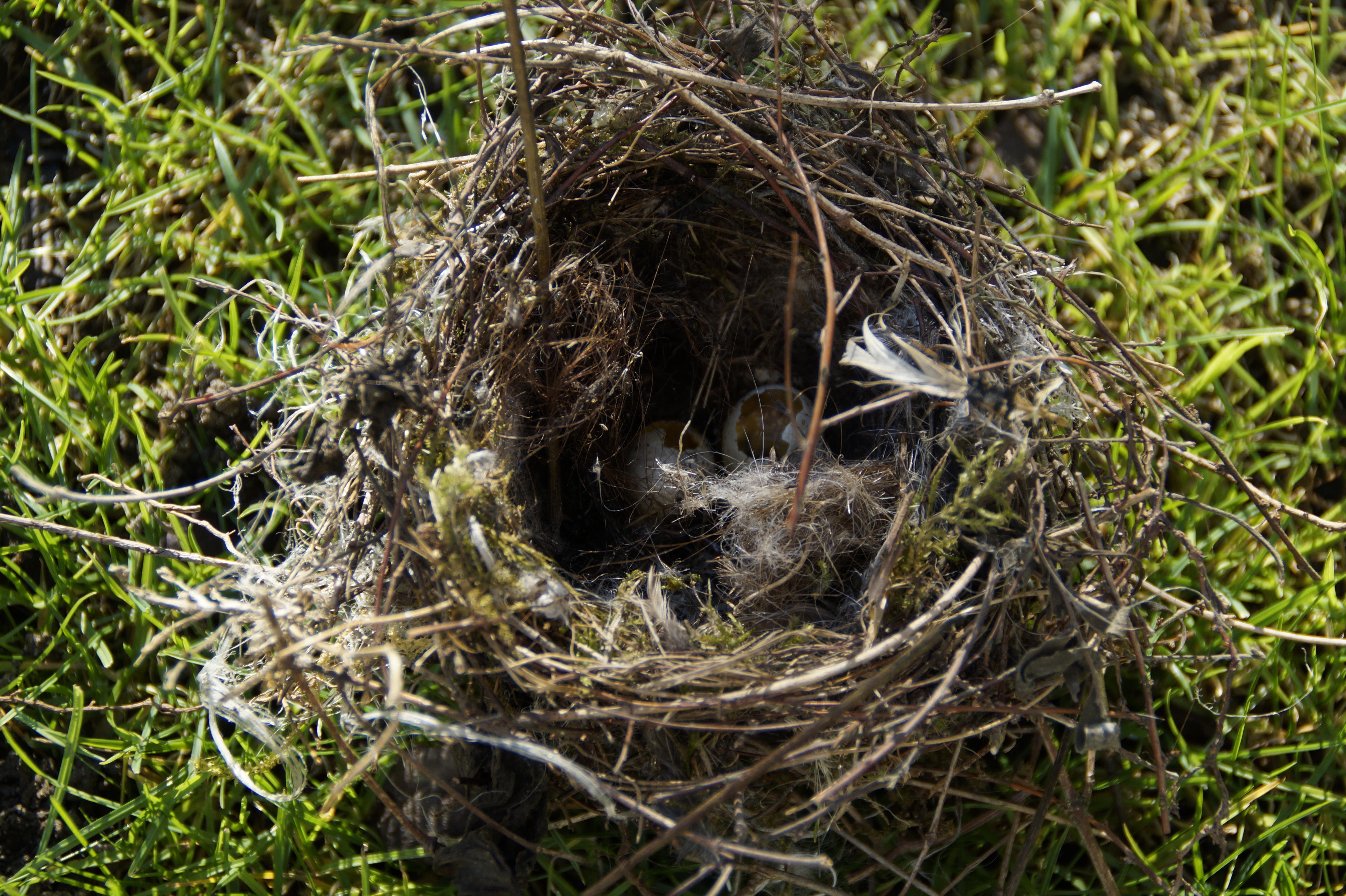 фото картинки гнезда птиц запросу отбойник
