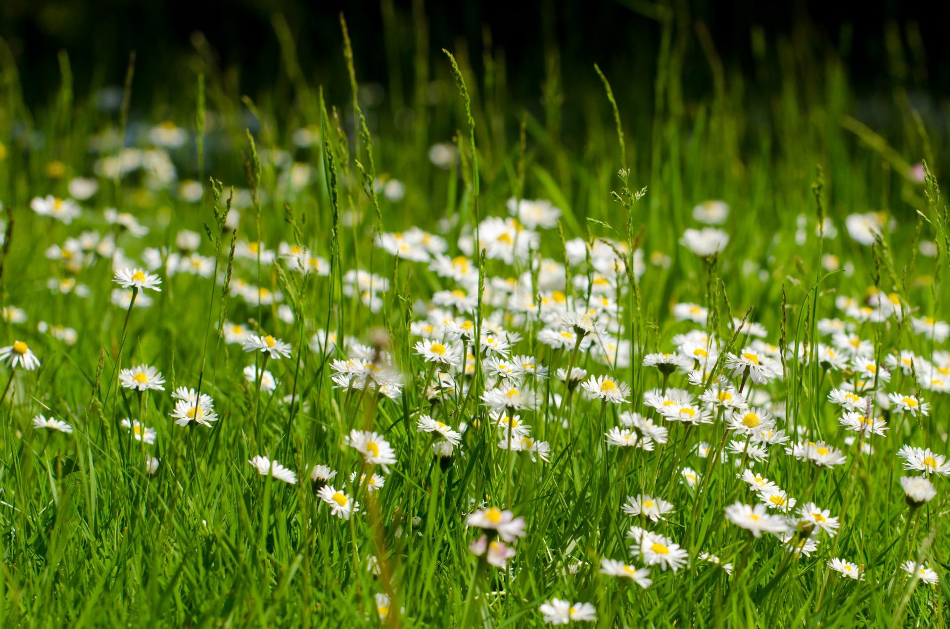 таким фото цветов в траве названия улиц города