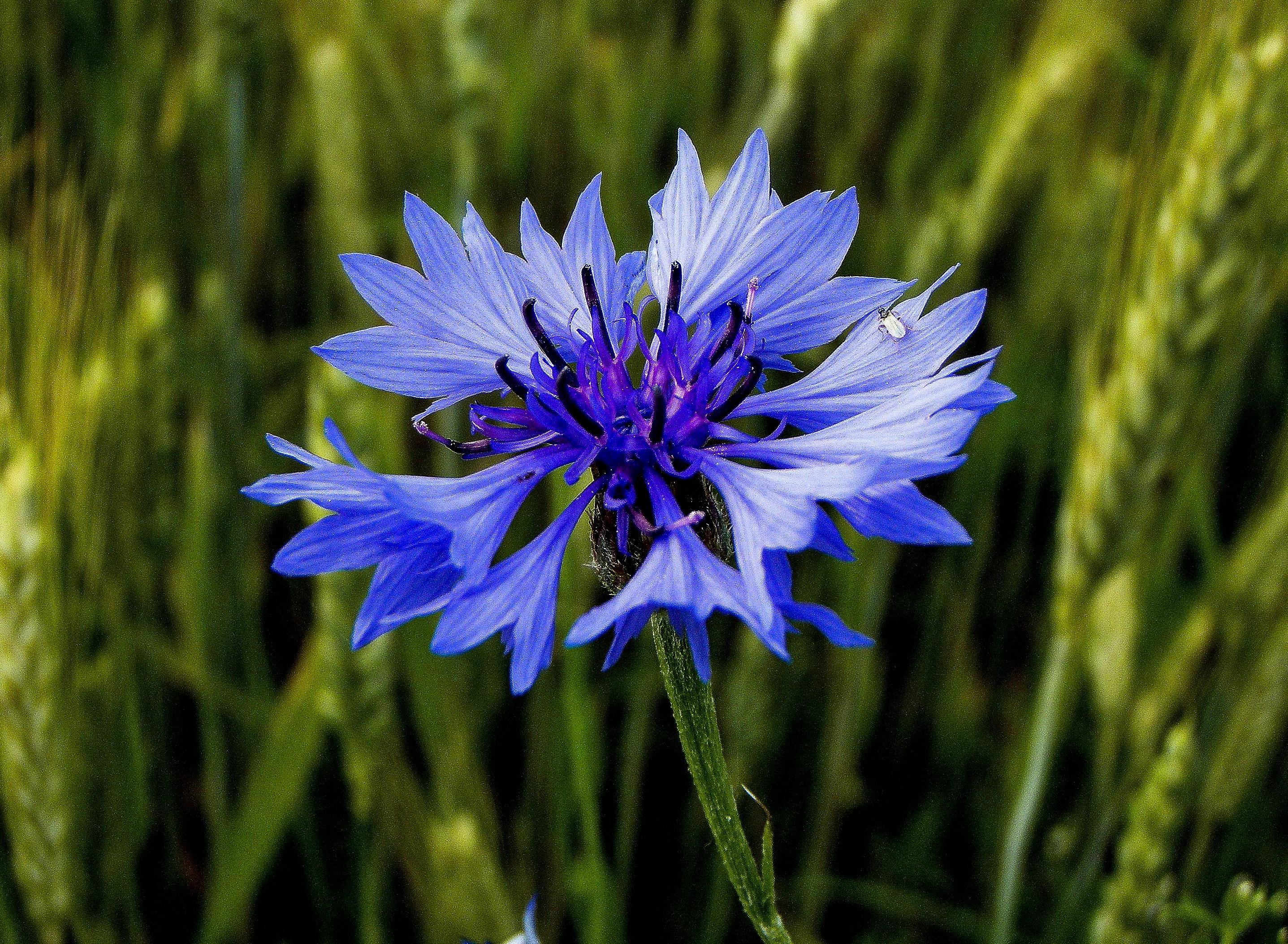 images gratuites la nature herbe fleur champ prairie p tale floraison t aliments. Black Bedroom Furniture Sets. Home Design Ideas