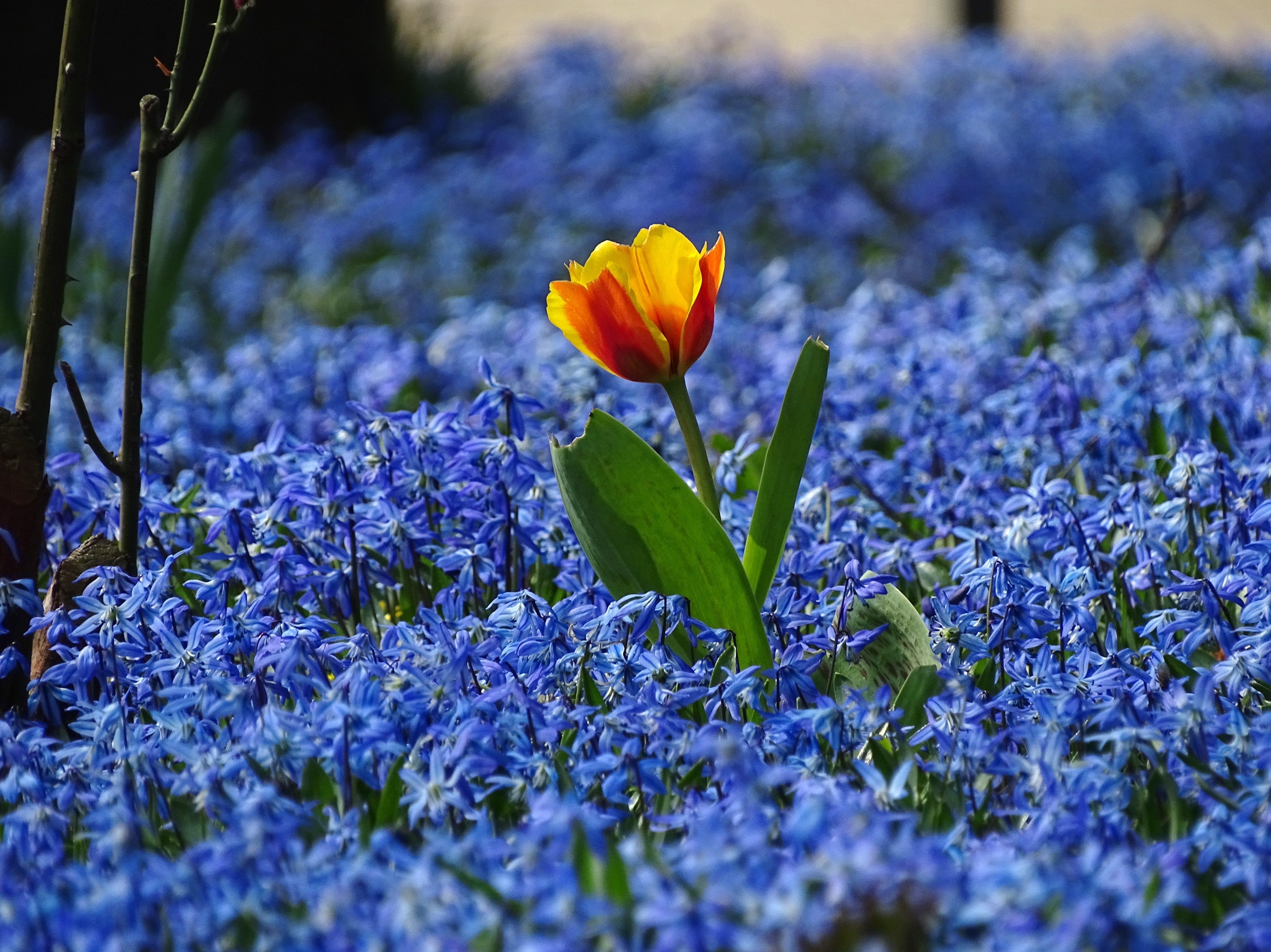 Oma Flower Blue und Rebecca Volpetti lutschen mehrere Schwänze
