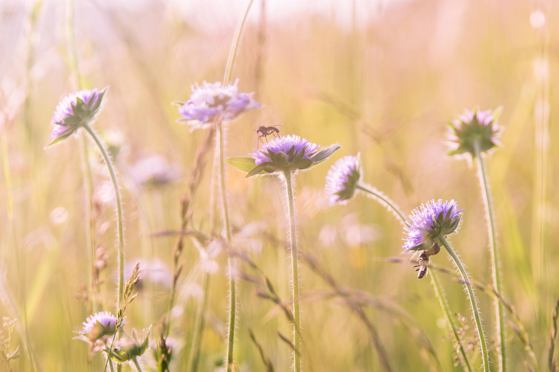 Free nature blossom field meadow prairie flower bloom
