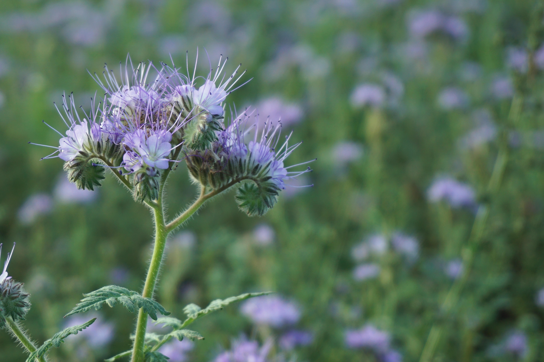 Blumenwiese Englisch kostenlose foto natur gras blühen feld wiese prärie blume