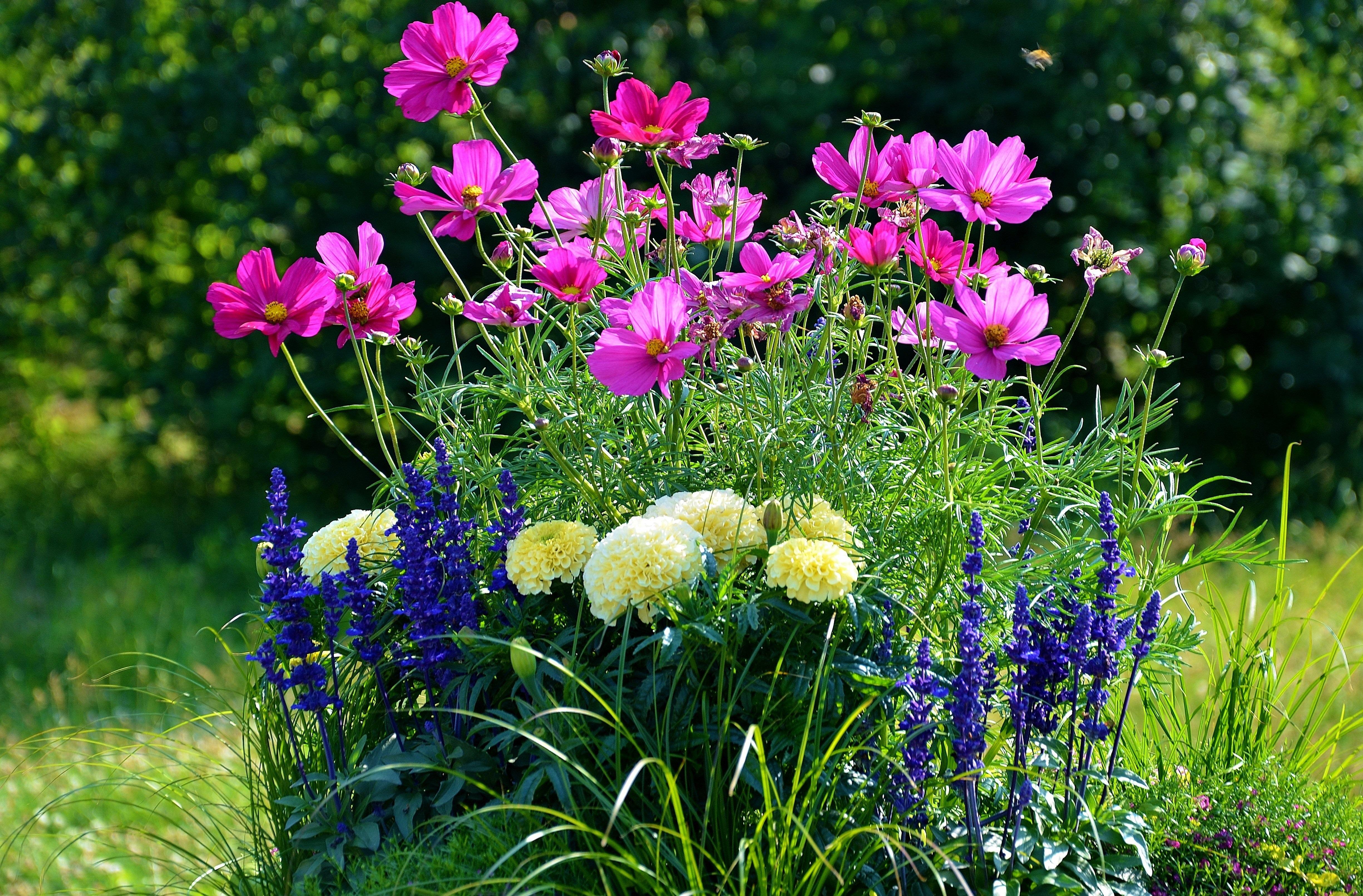вам фото июль цветы на рабочий стол чтобы узнать