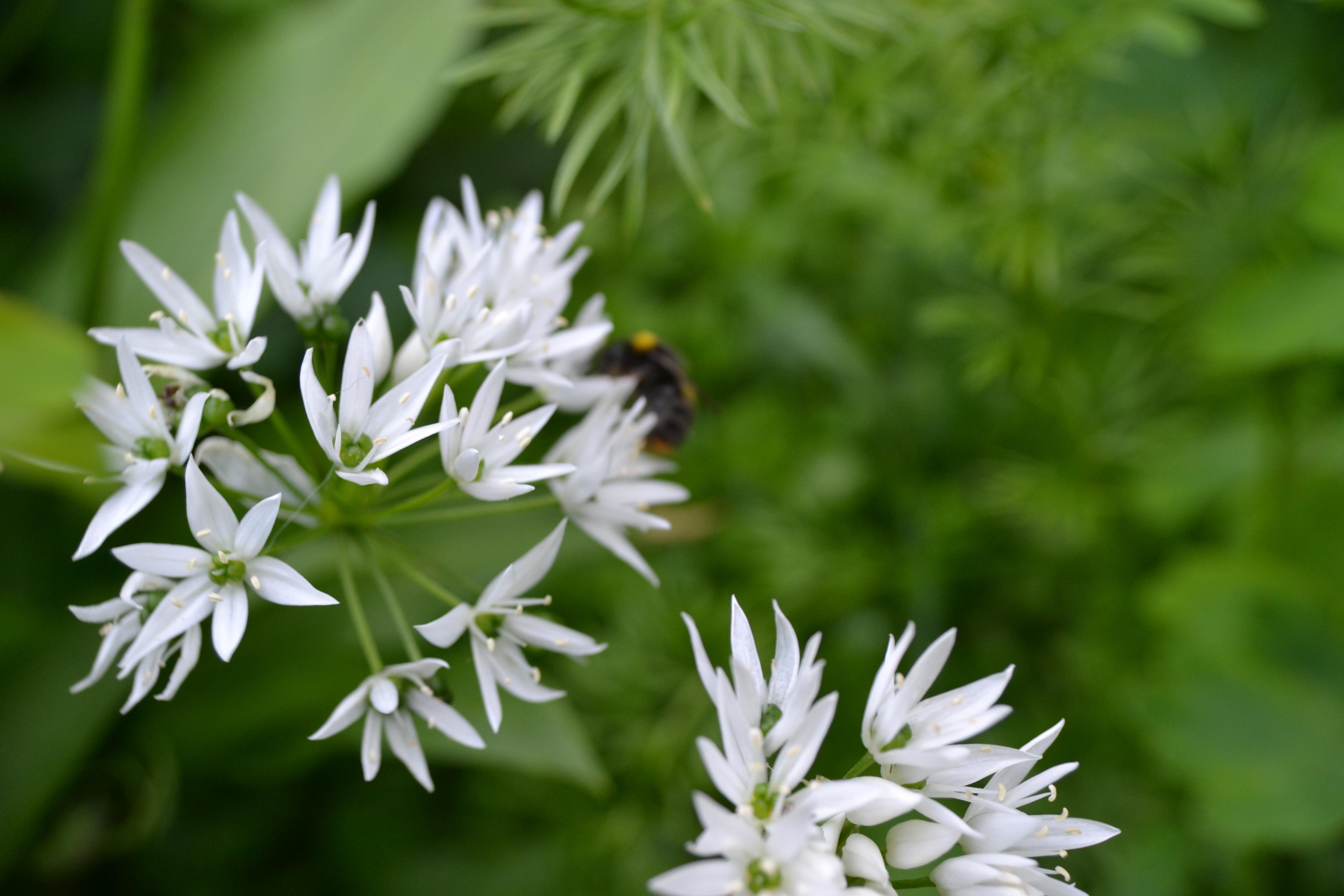 Images Gratuites La Nature Herbe Prairie Vert Botanique Flore