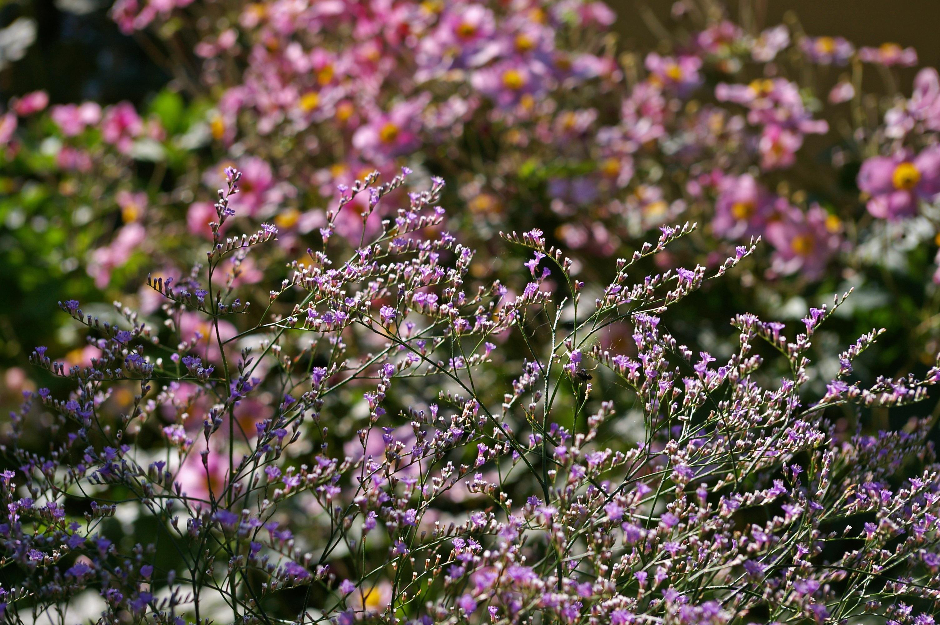 Free images nature grass blossom meadow purple - Plantas de sol directo ...