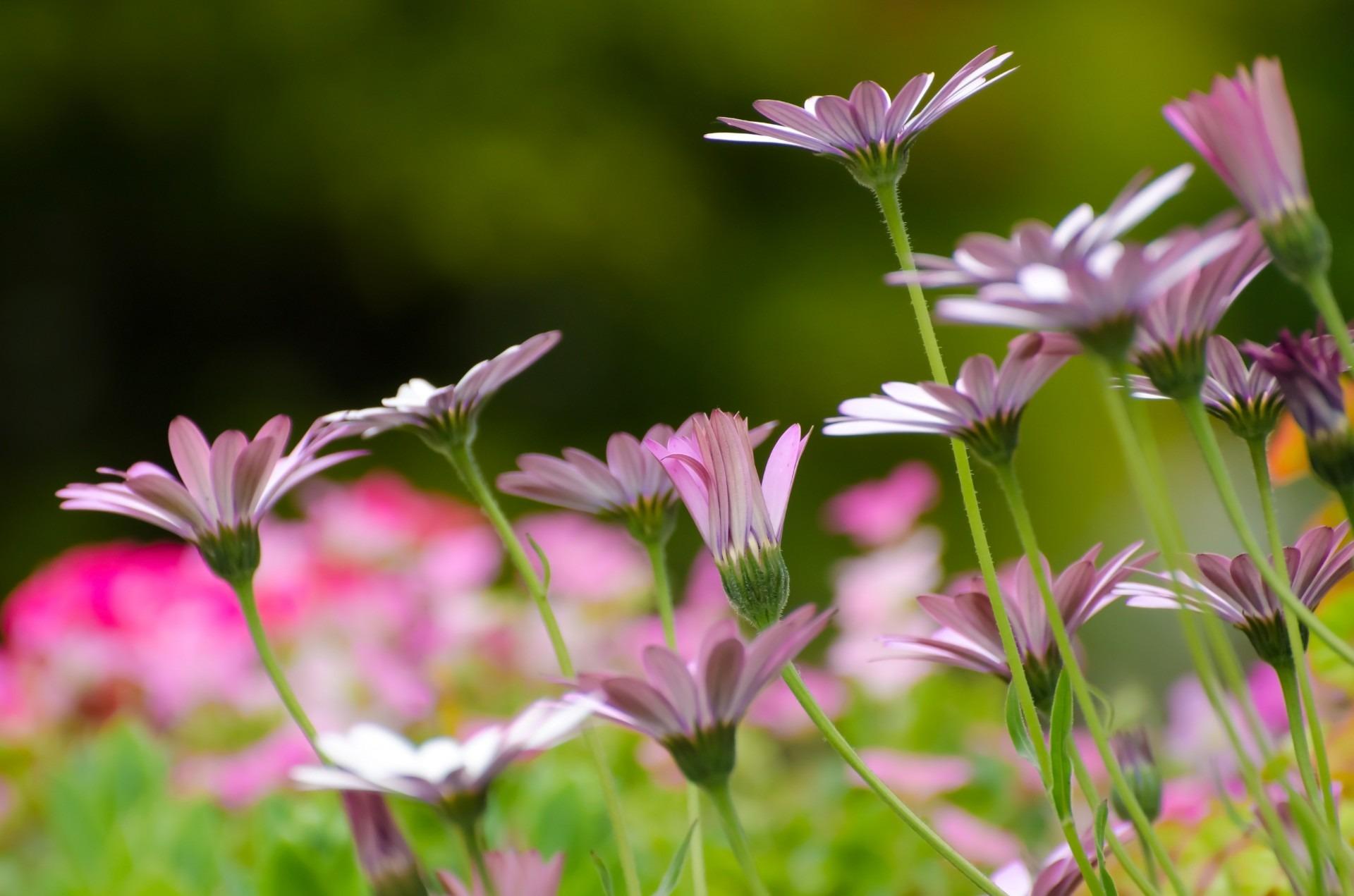 fotos gratis naturaleza csped prado pradera ptalo verano amor regalo decoracin primavera natural botnica amarillo boda flora temporada