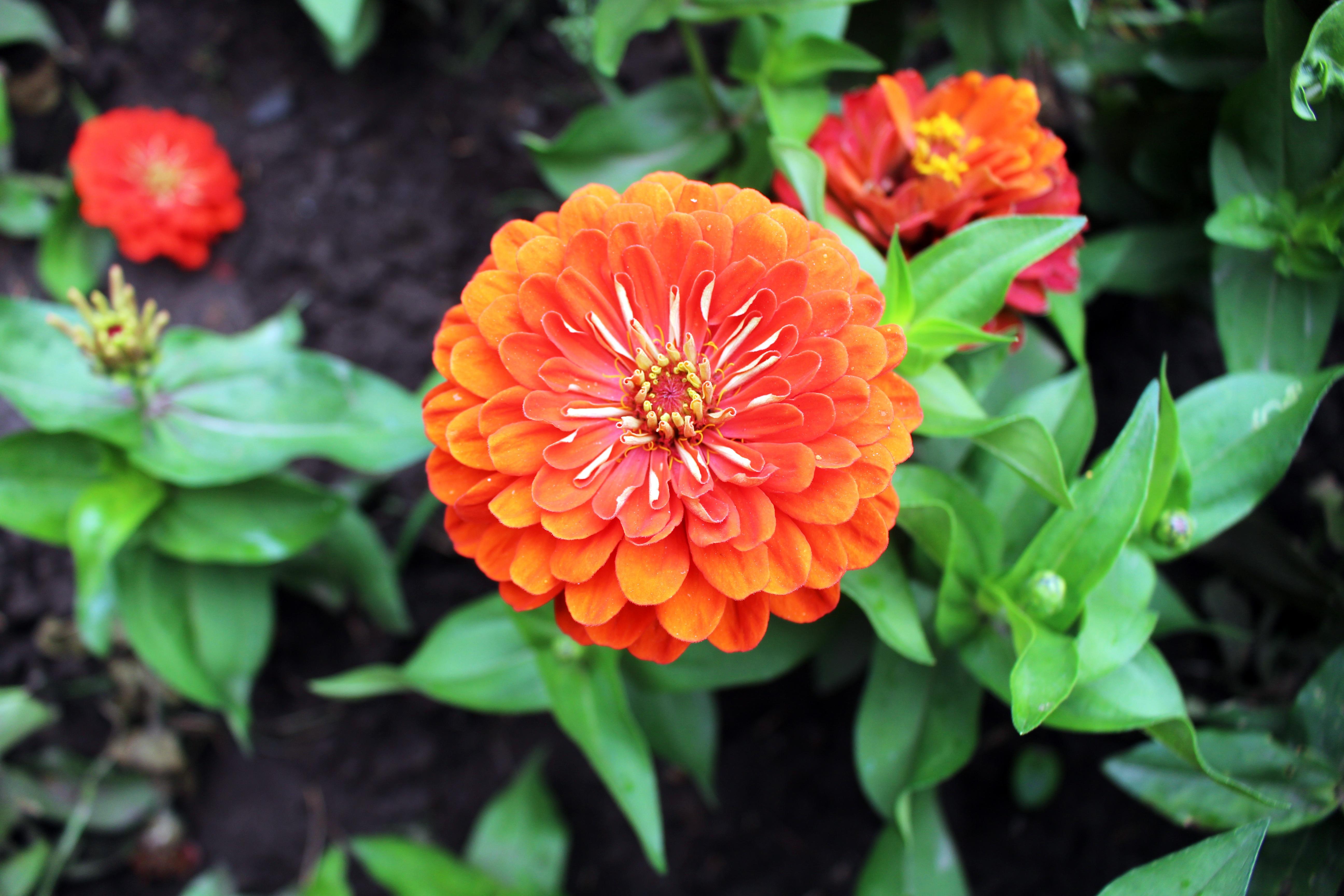 Super Banco de imagens : natureza, grama, Flor, plantar, dom, Prado  SG58